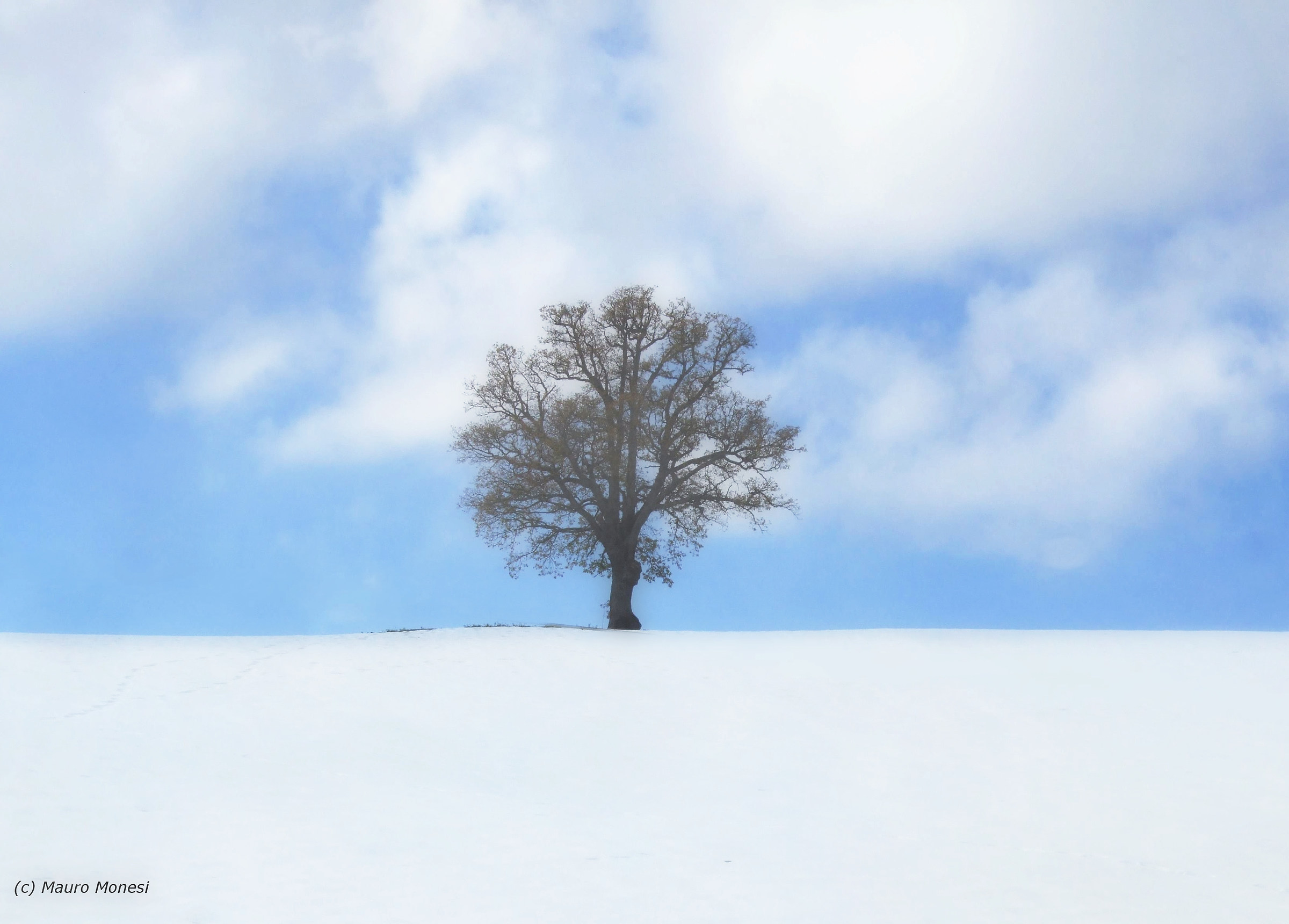 The solitary...