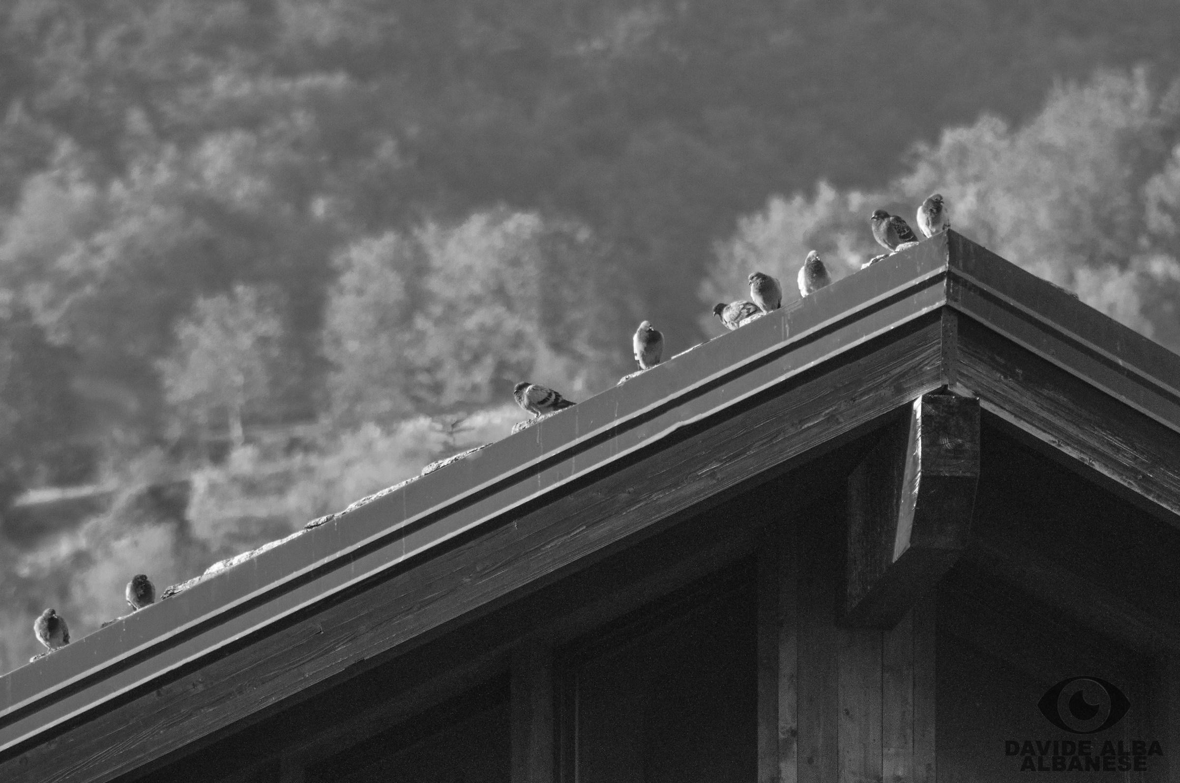 Pausa sul tetto di St Vincent...