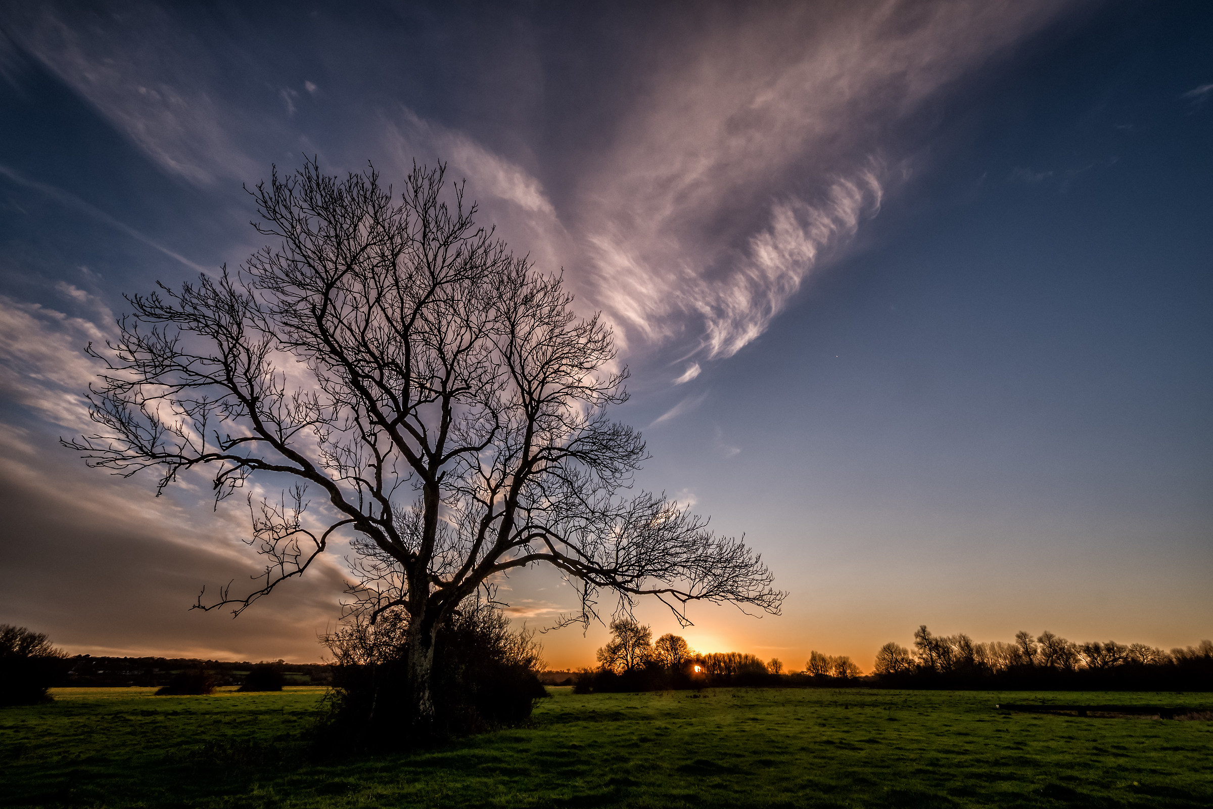 A Winter Tree At Sunset...