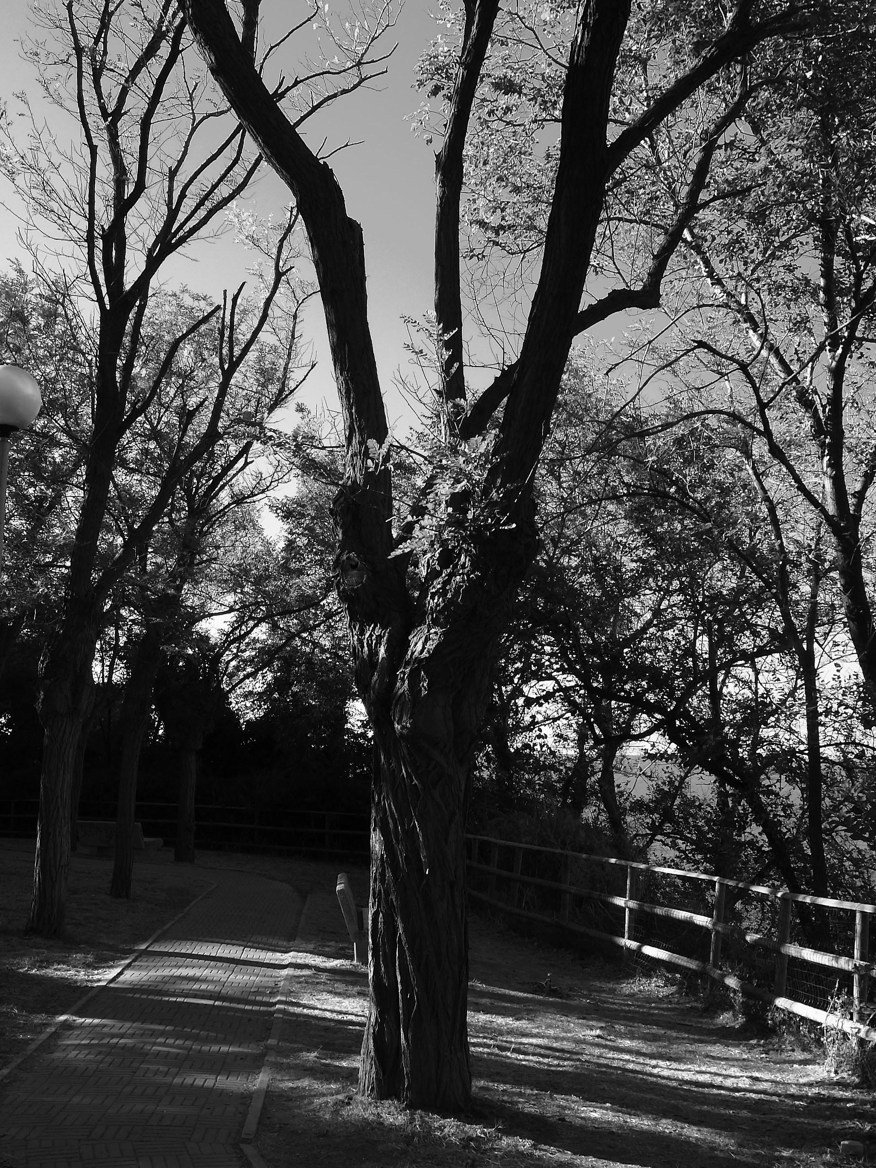 Alberi e ombre_04...