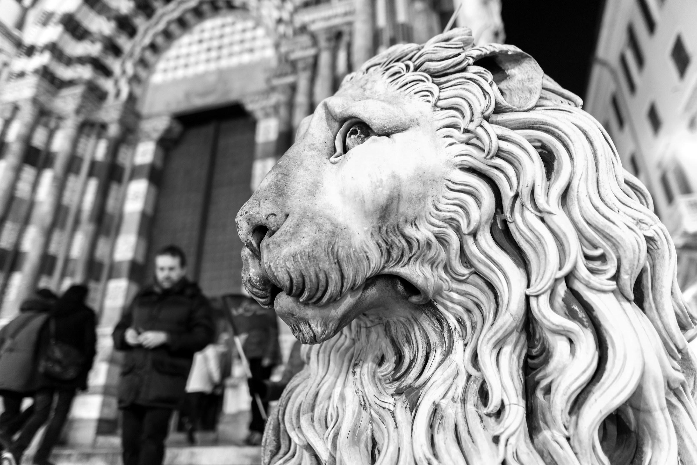 Il leone del Duomo di Genova...
