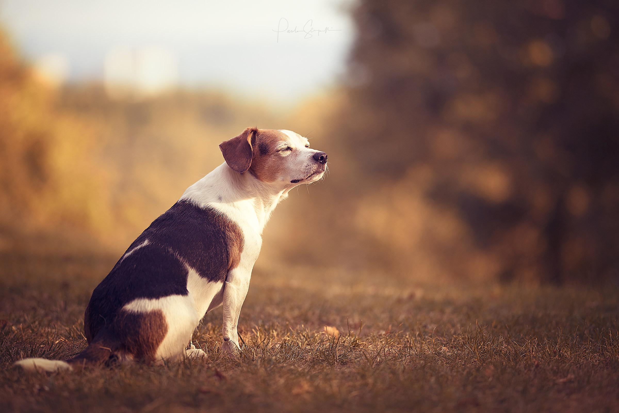 Beautiful dog life!...