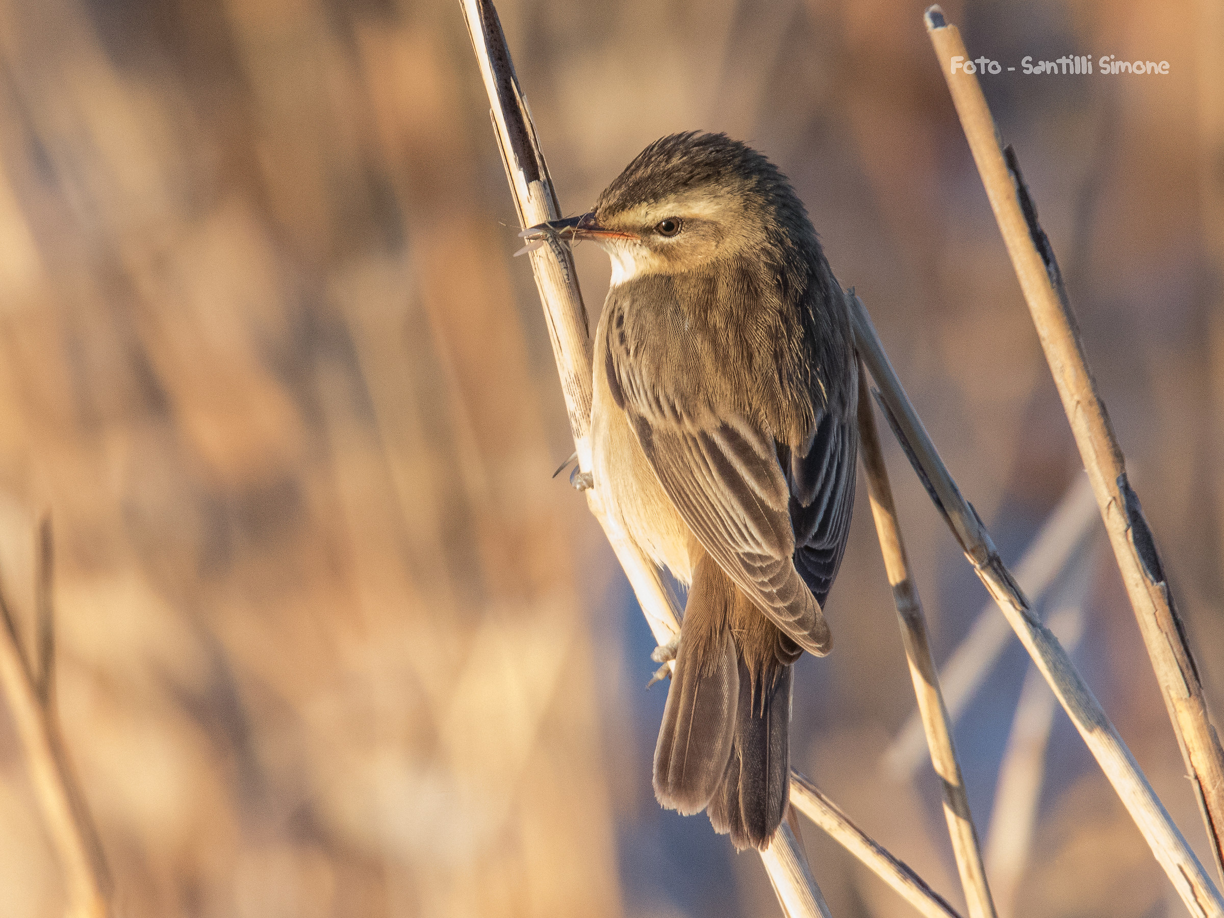 warm lights in the reeds ......