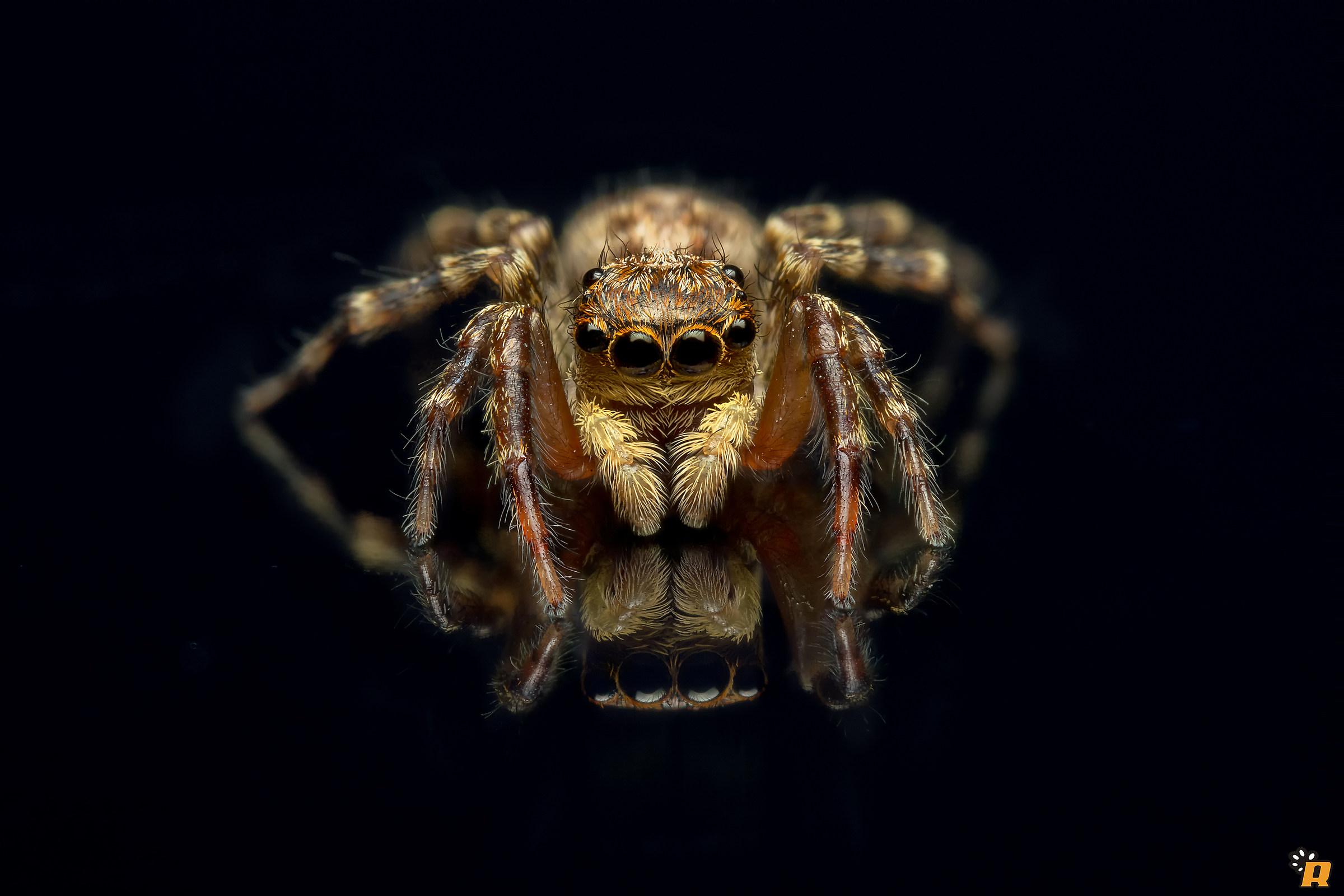 Vanity spider...