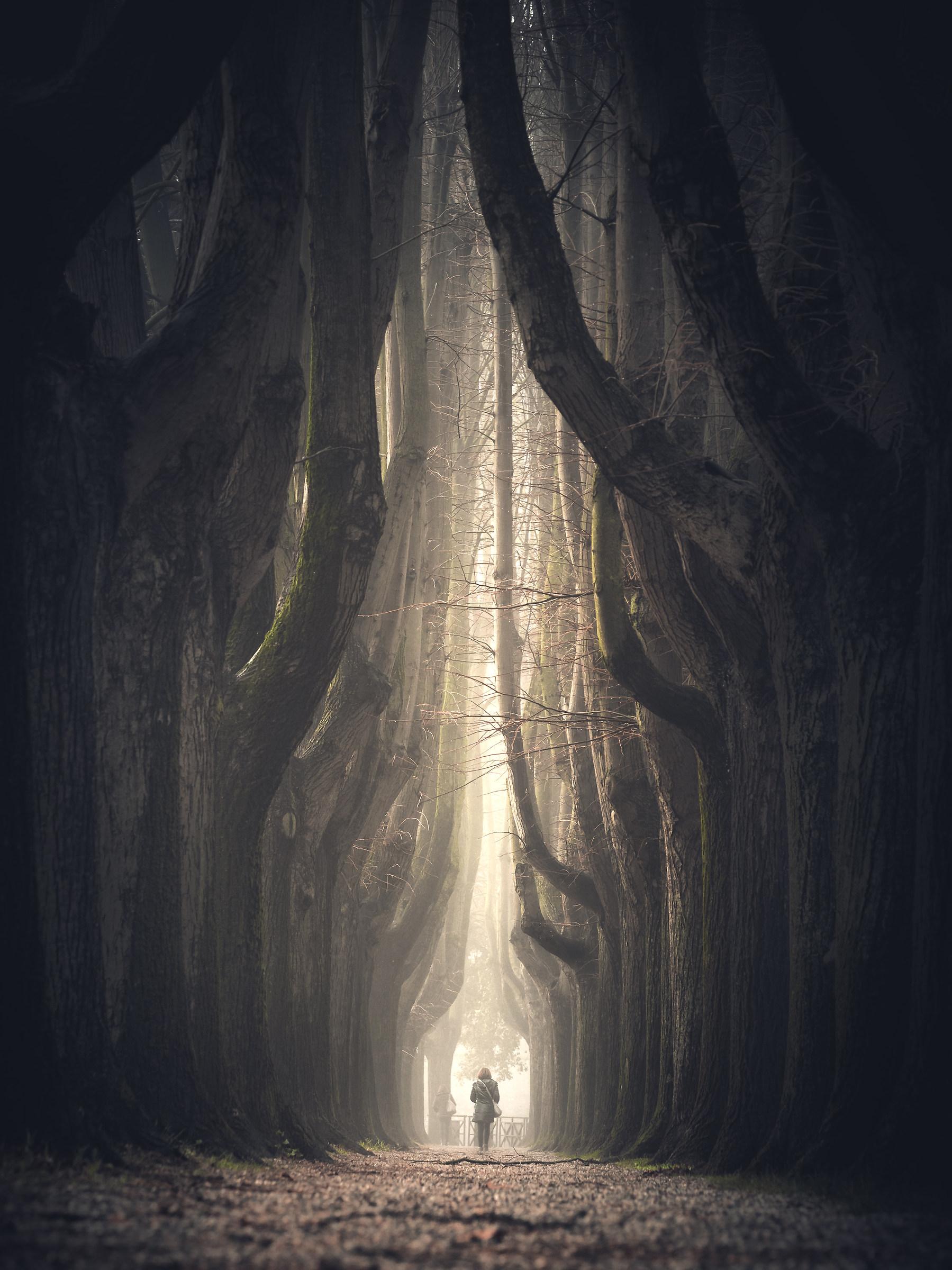 My tunnel...