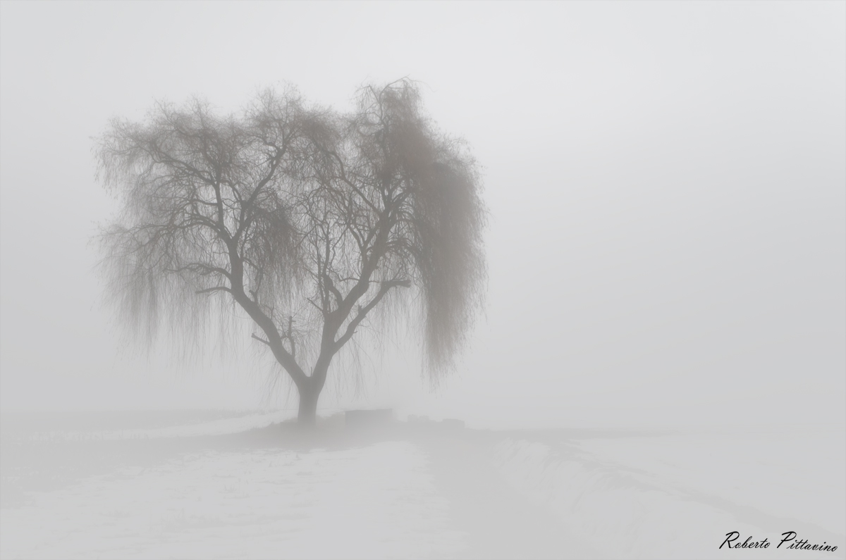 Only in the fog...