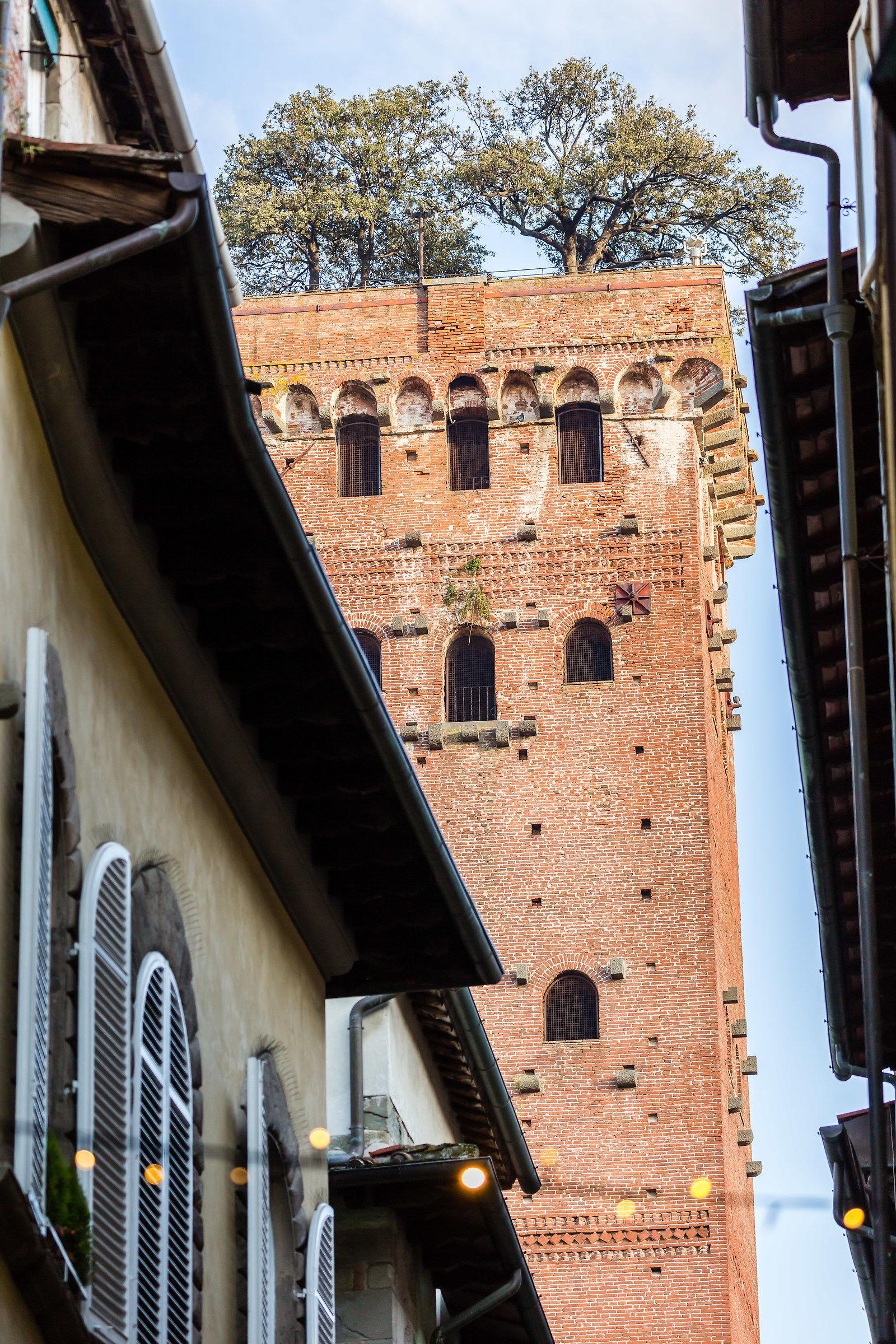 Lucca - Guinigi tower...