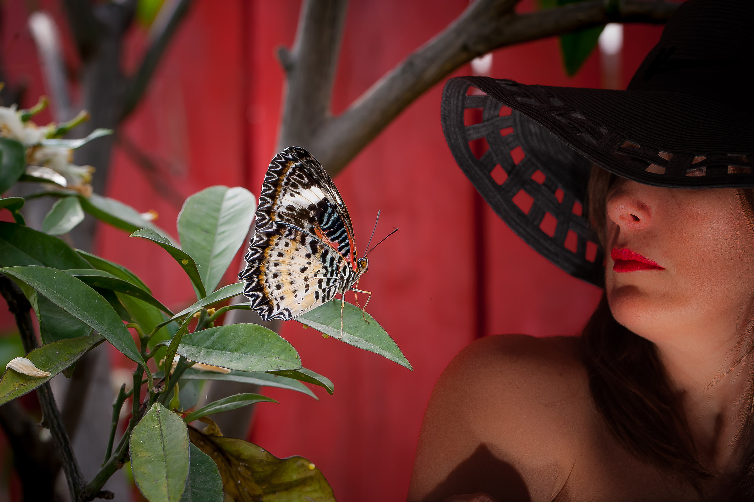 Paola and the Butterfly...
