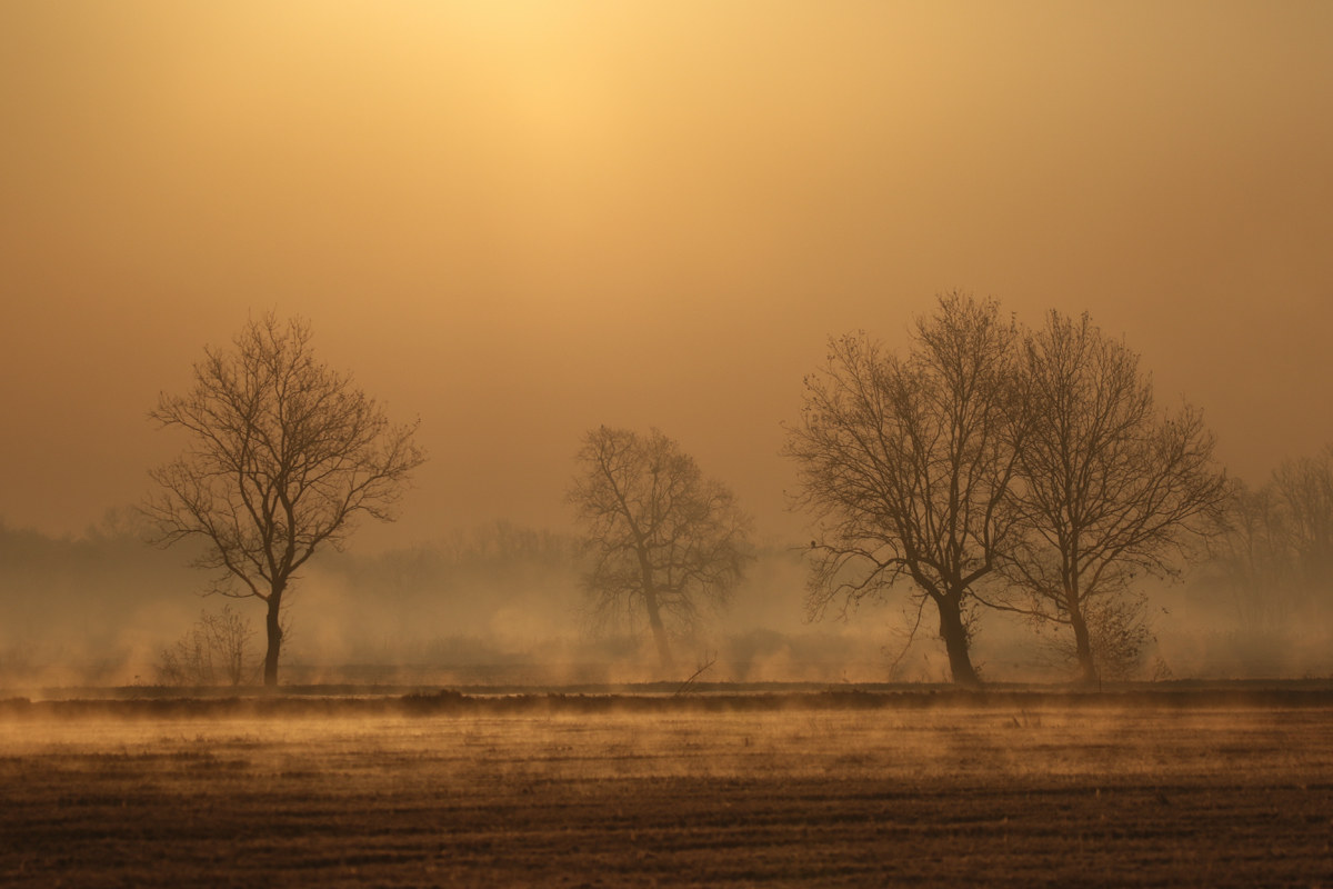 first mist on the fields...