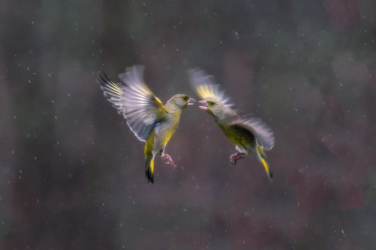 Fight in the rain...