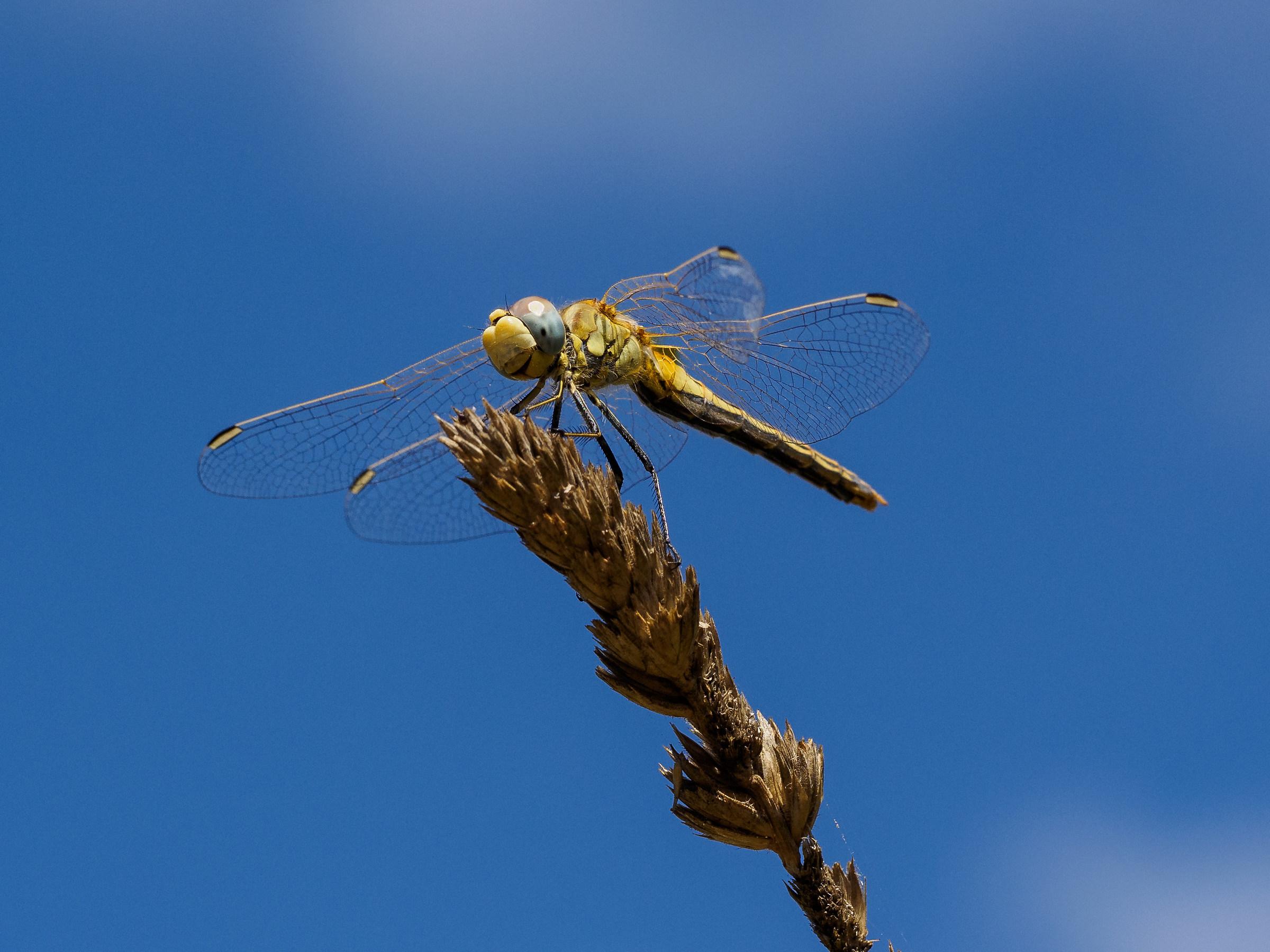 Dragonflies 2...