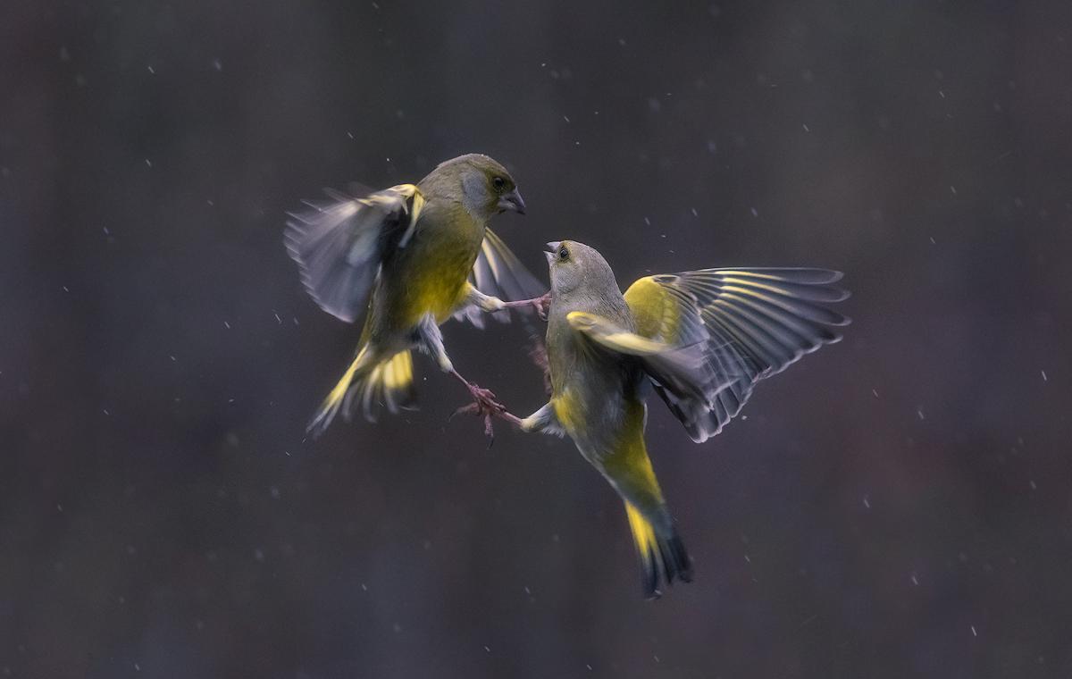 Wet fighting...