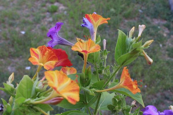 Fiori sinonimo di colori juzaphoto for Sinonimo di autore