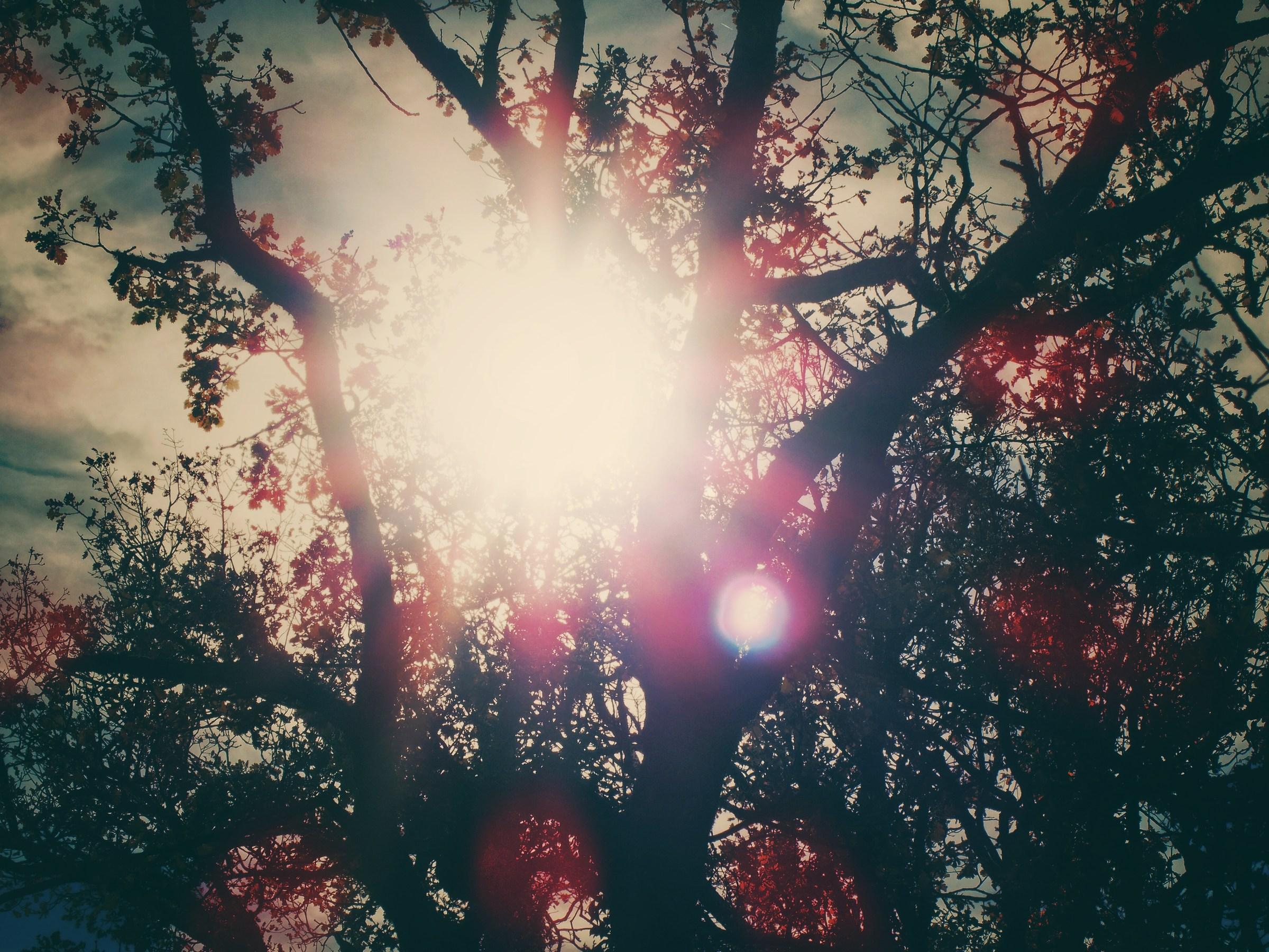 Fairy flare...