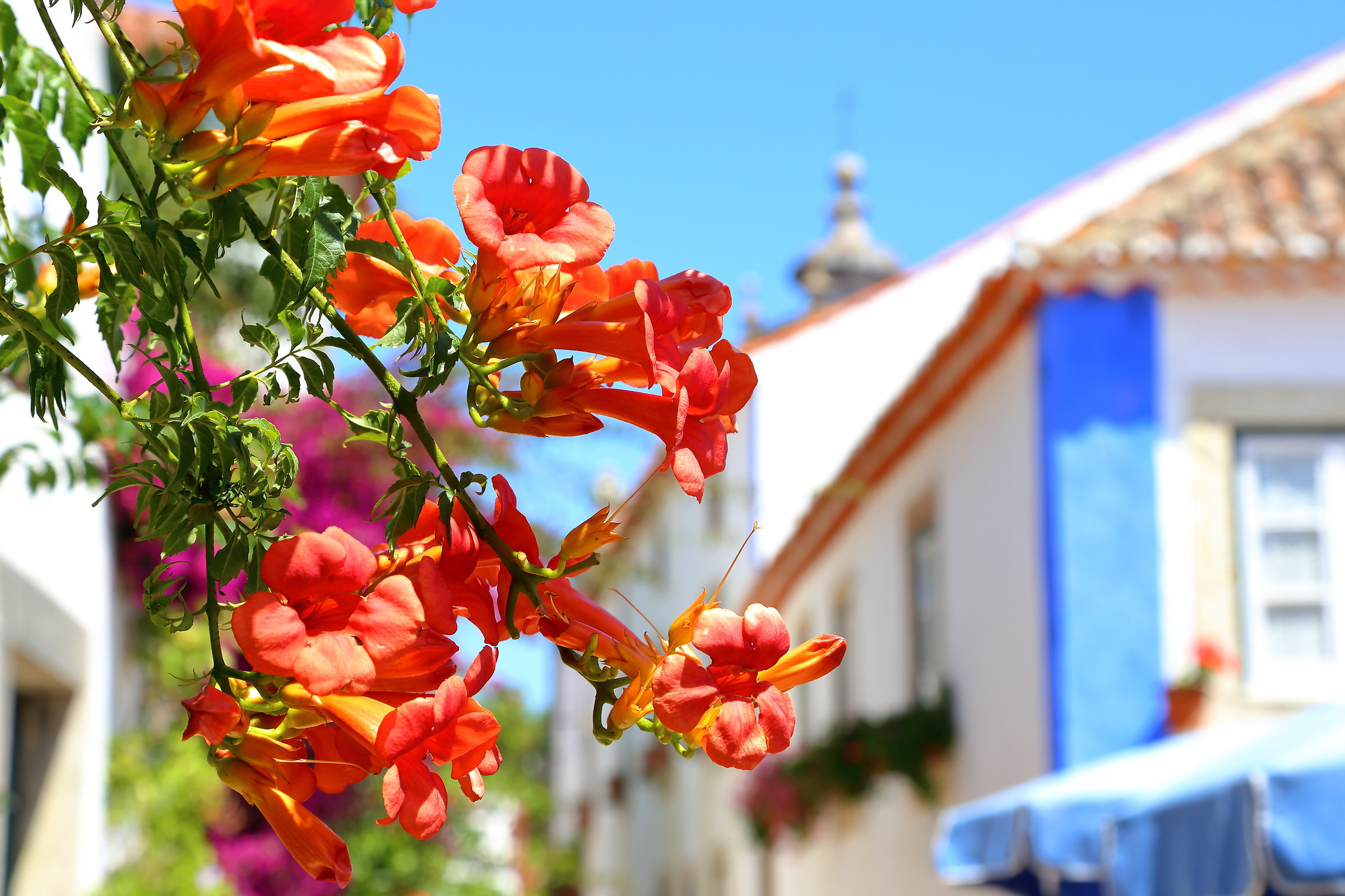The smell of Obidos...