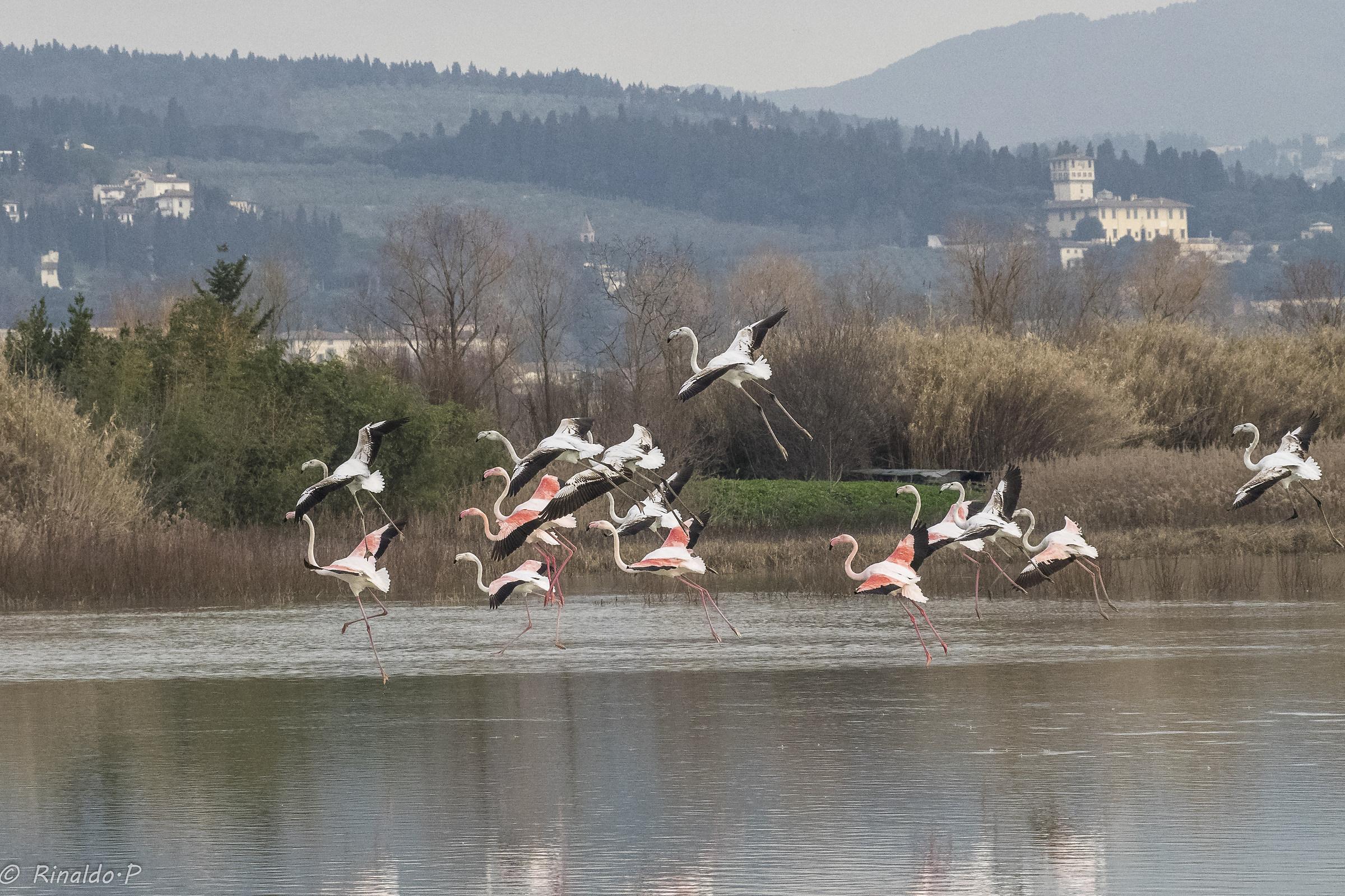 pink flamingos in Florence...
