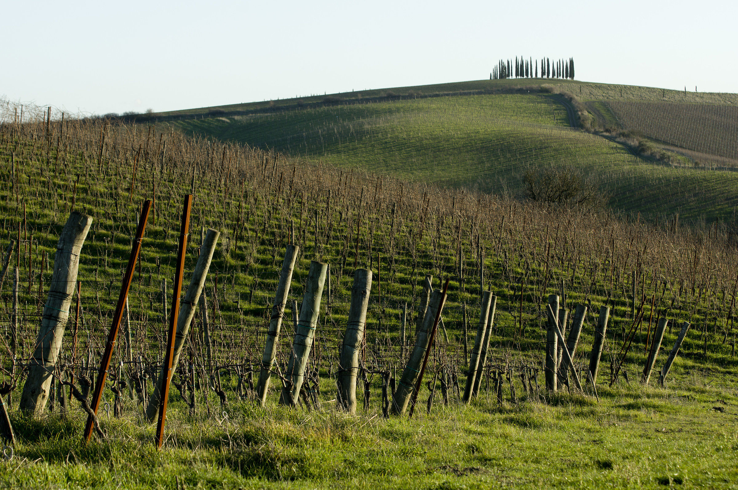 the new vineyards at the gates of Chianti...