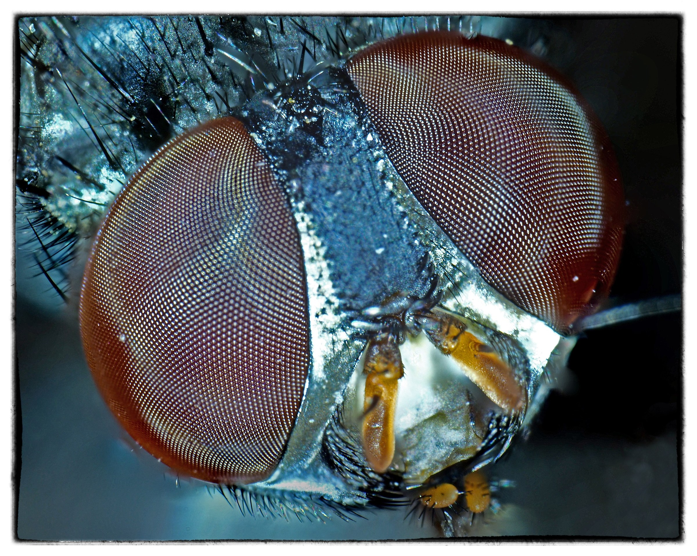 The fly...