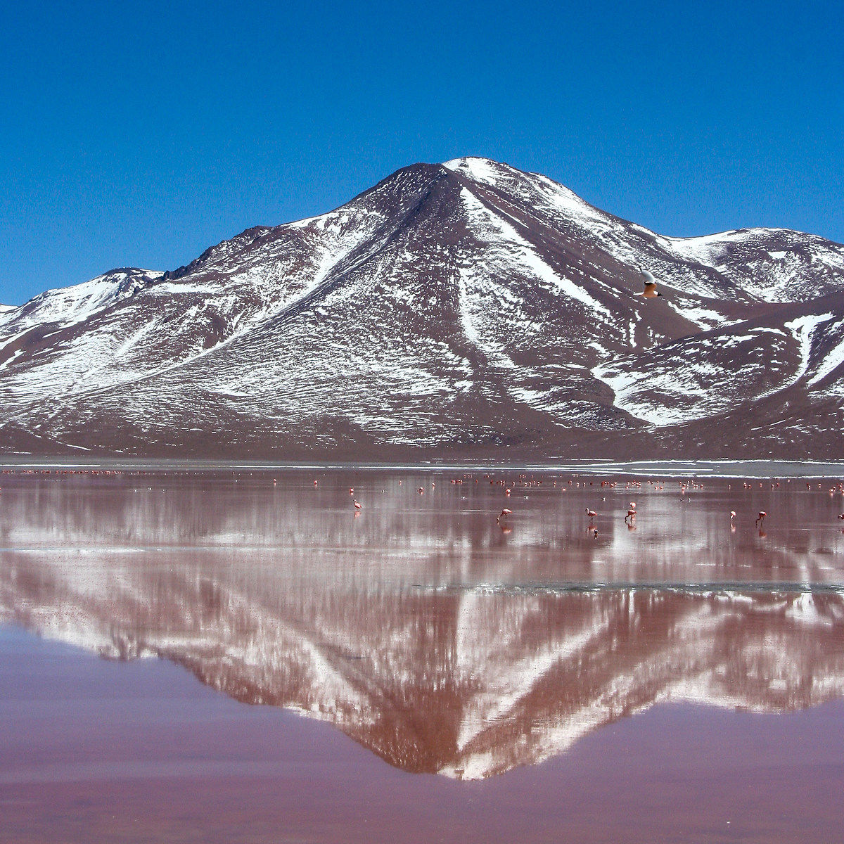 A volcanic tipetto (Licancabur)...
