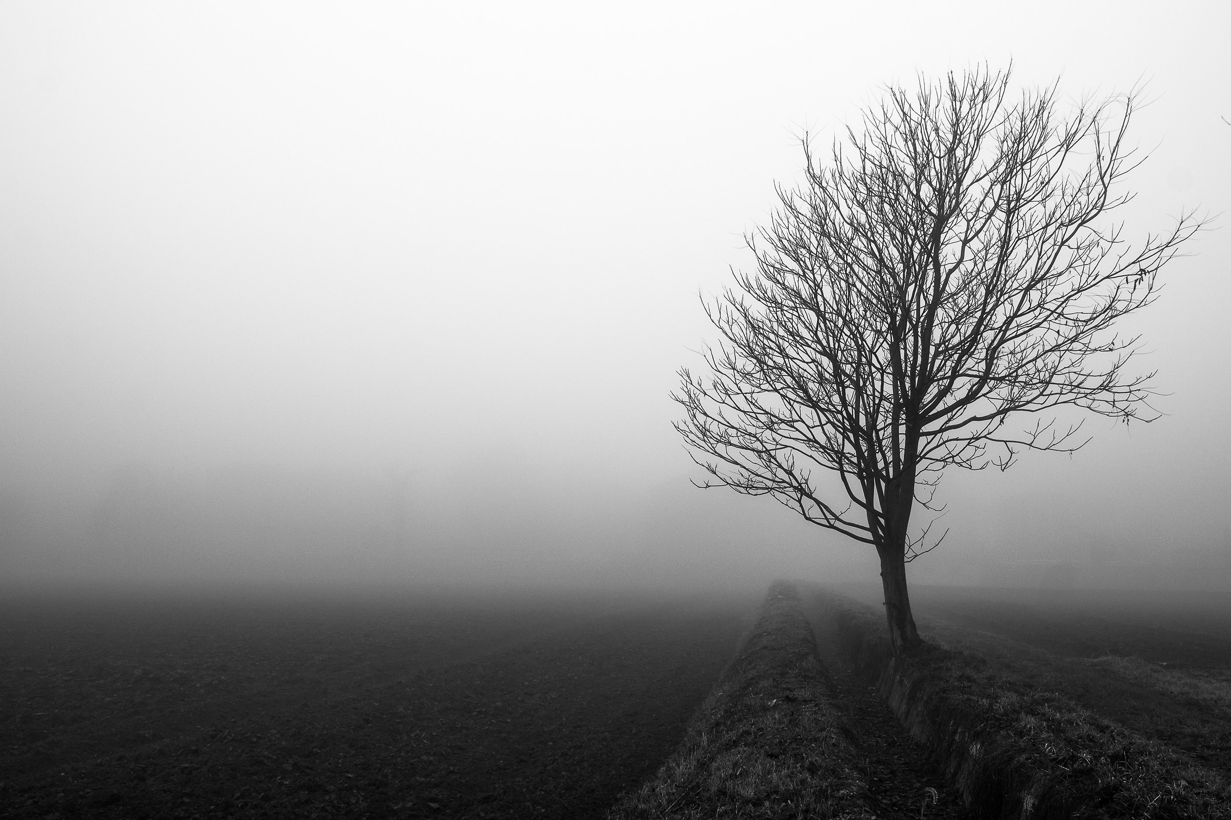 Solo un albero...