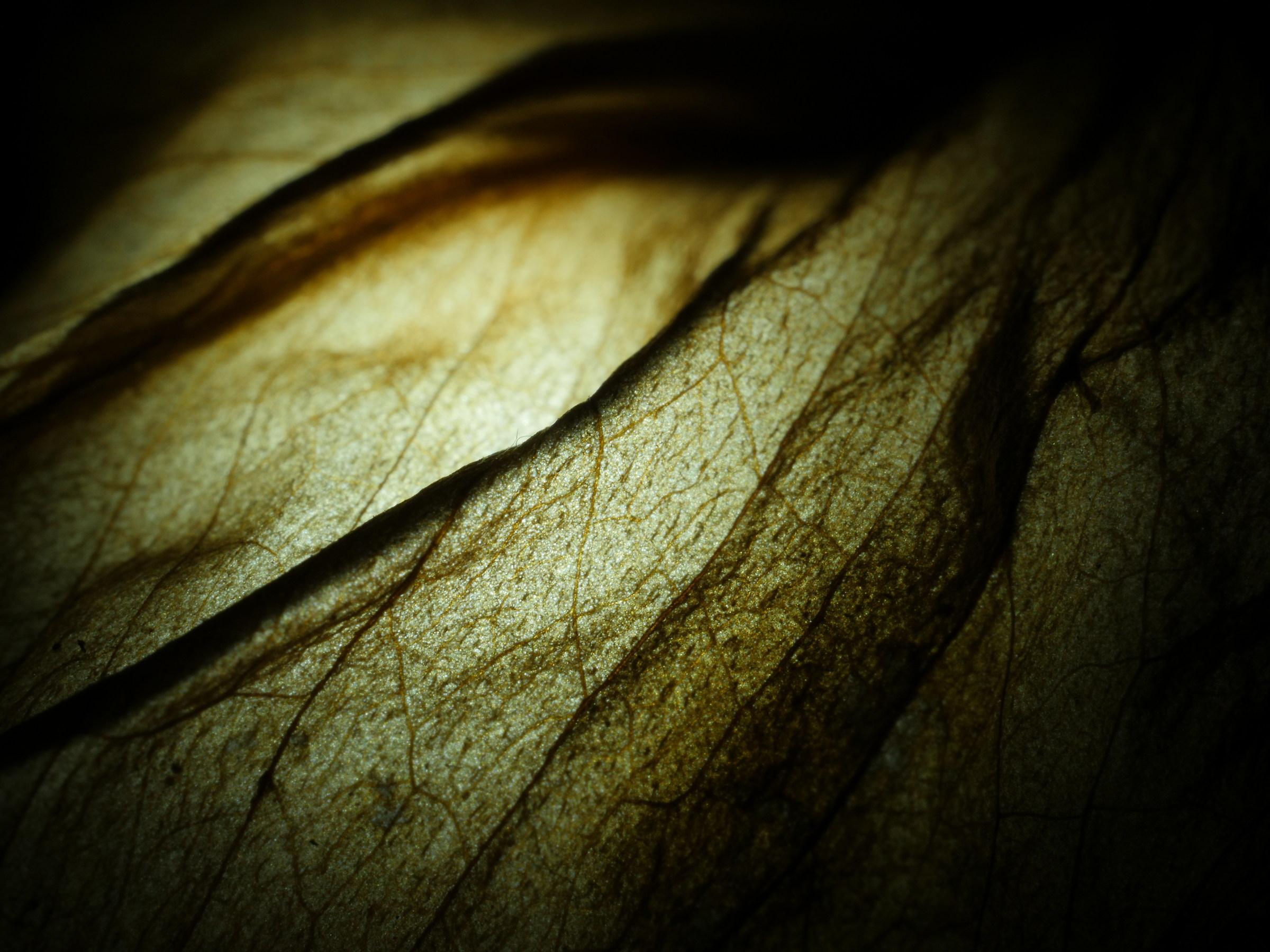 dead leaf poem...