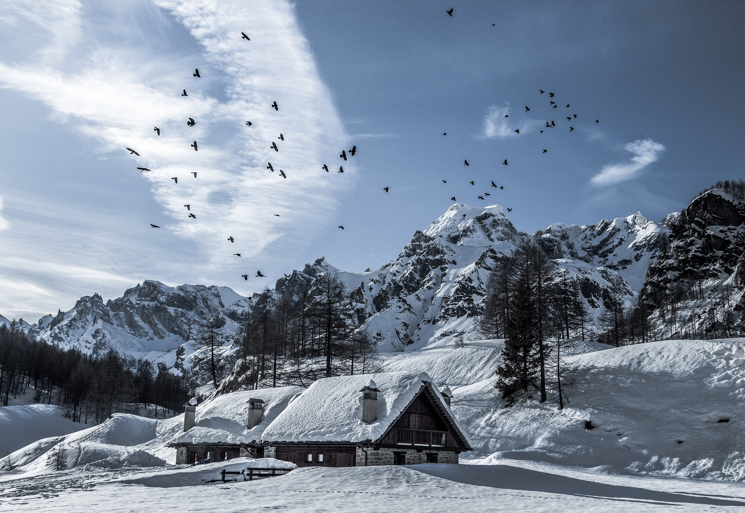Flock of birds - Alpe Devero...