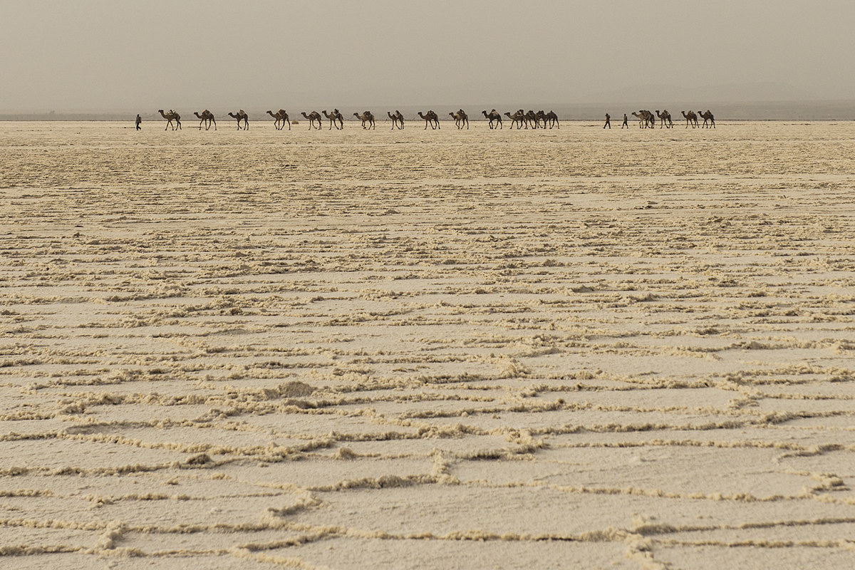 Salt caravan (Dancalia)...