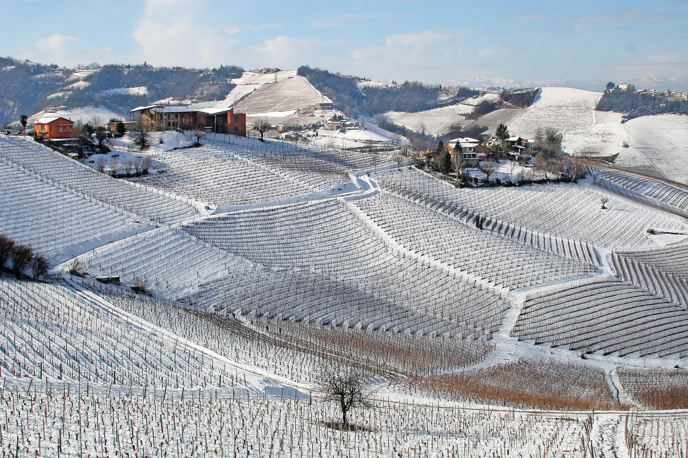 Vineyards of the Langhe...