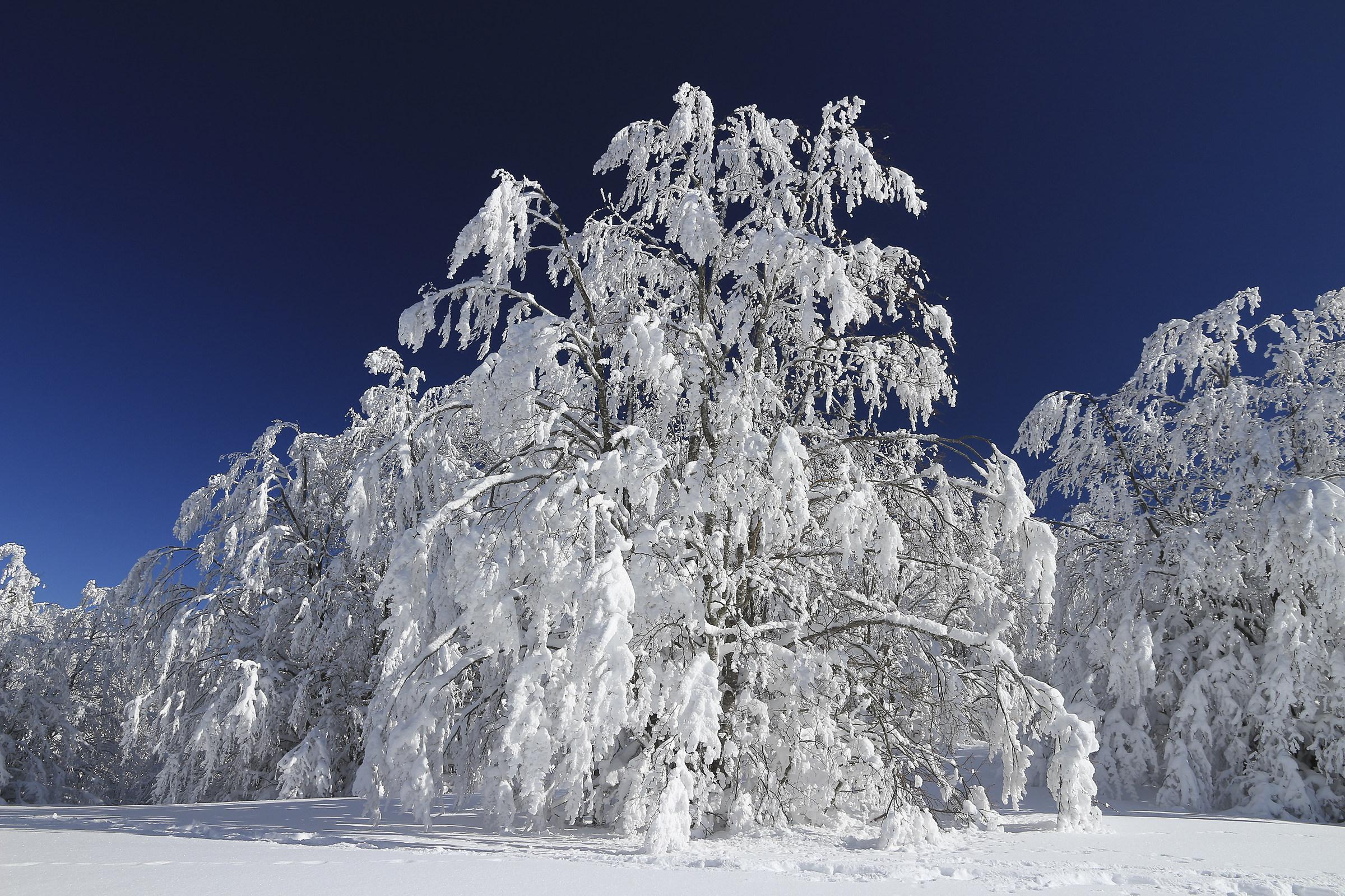 The crystal tree...