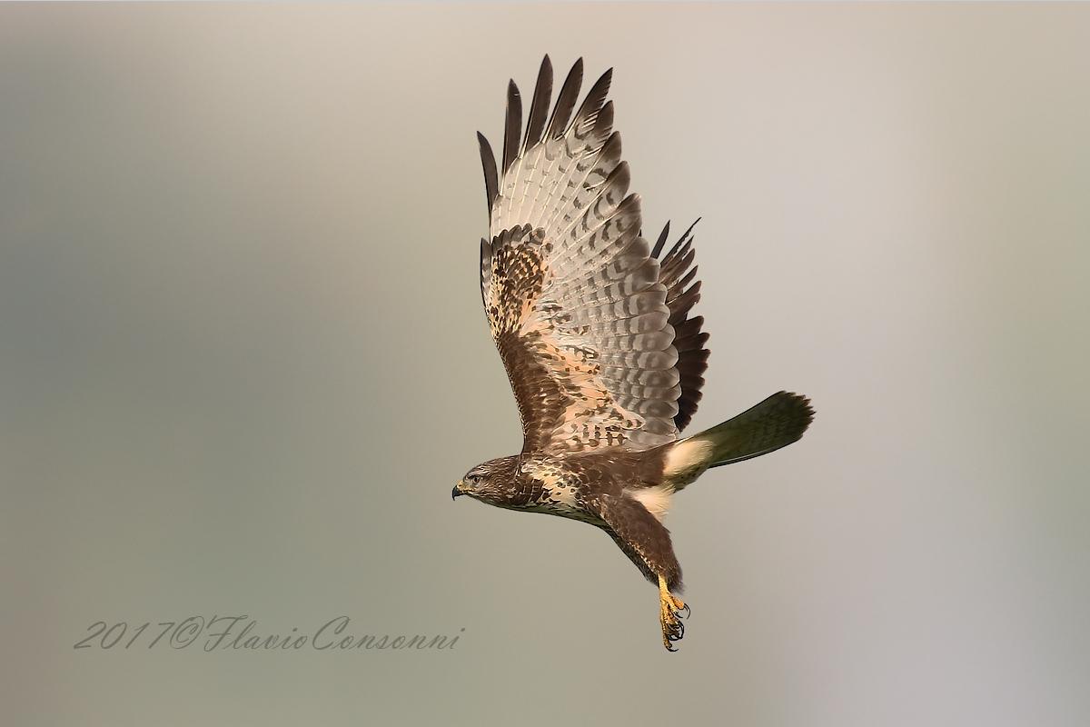 Takeoff buzzard...