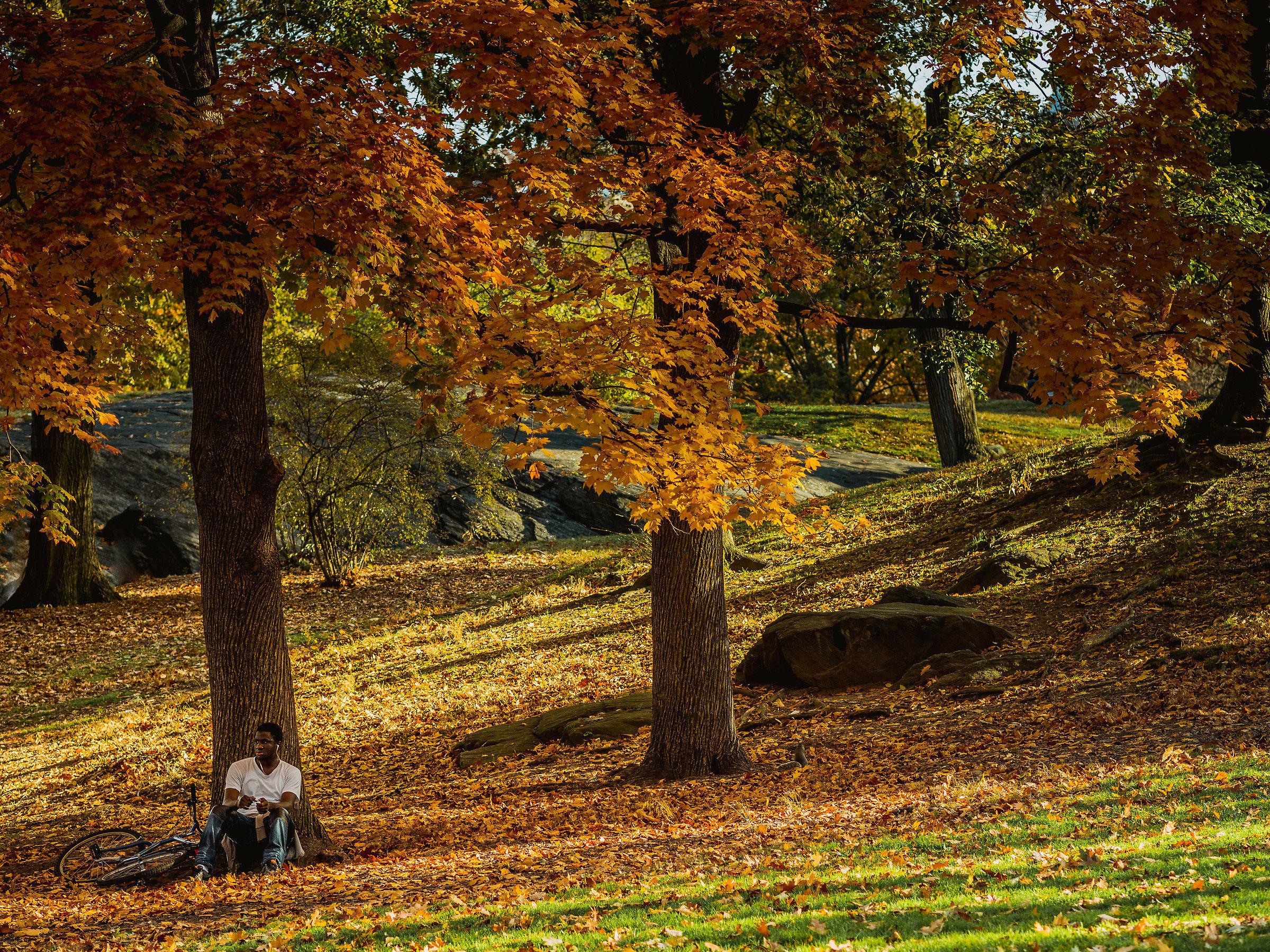 NY4 - Central Park...