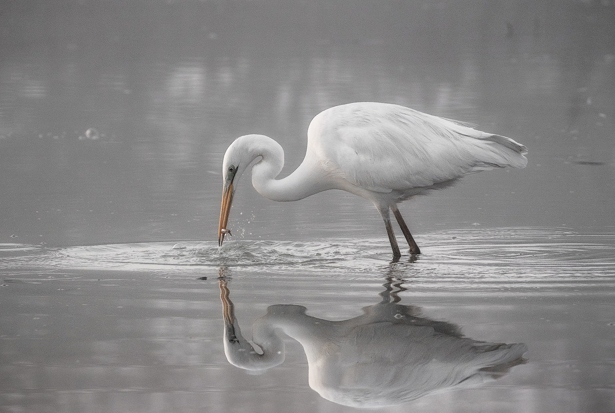 A reflected hunting...