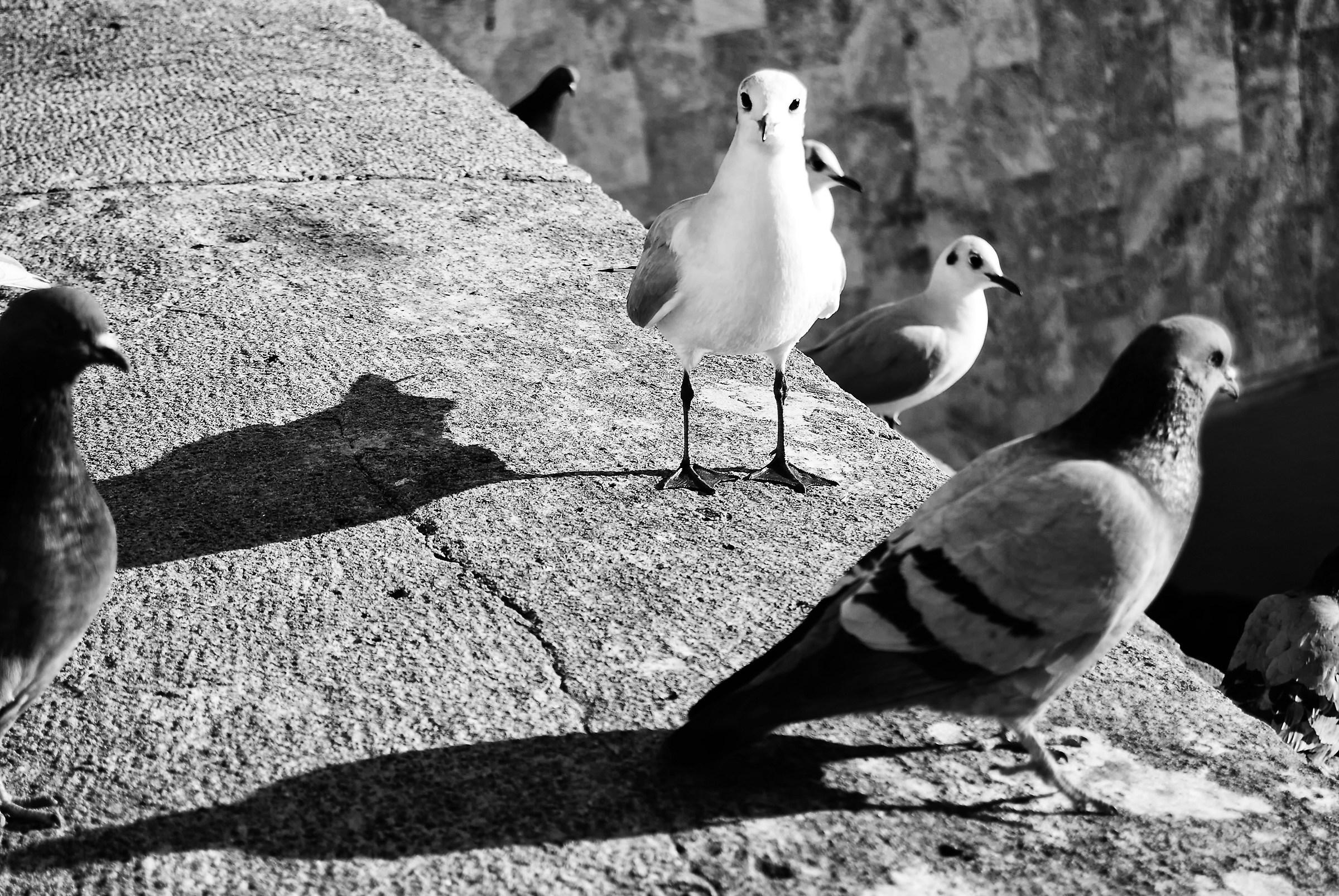 Uccelli...