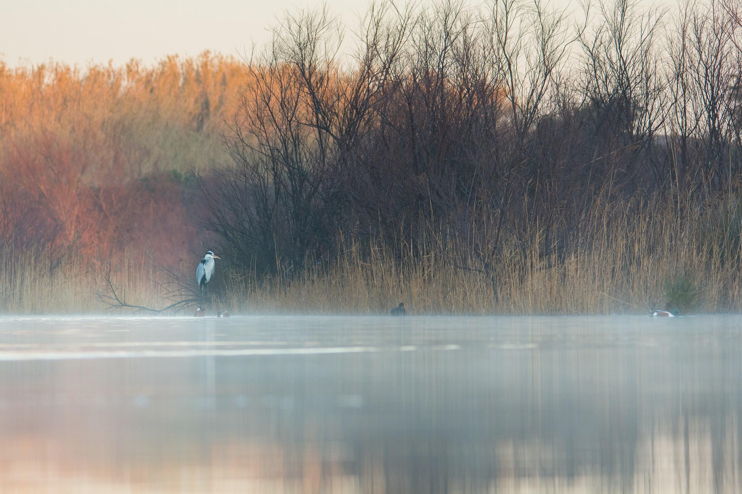 Swamp at dawn...
