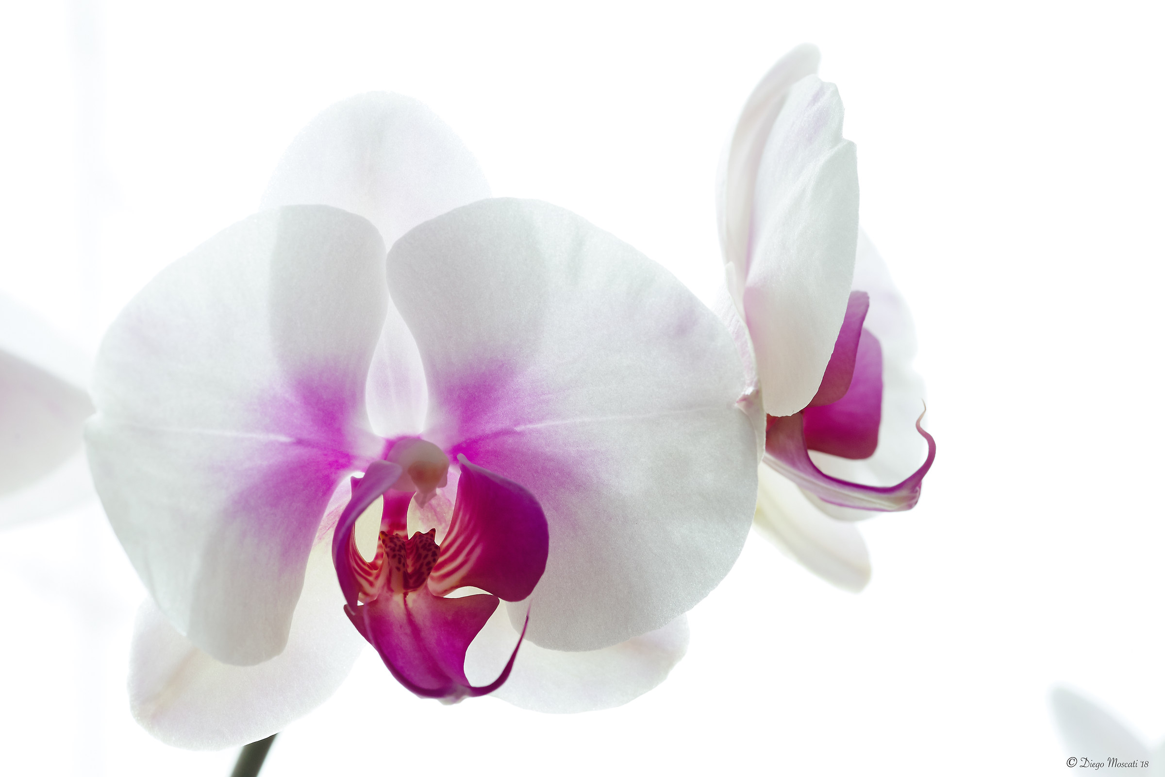 orchids in the light 2...