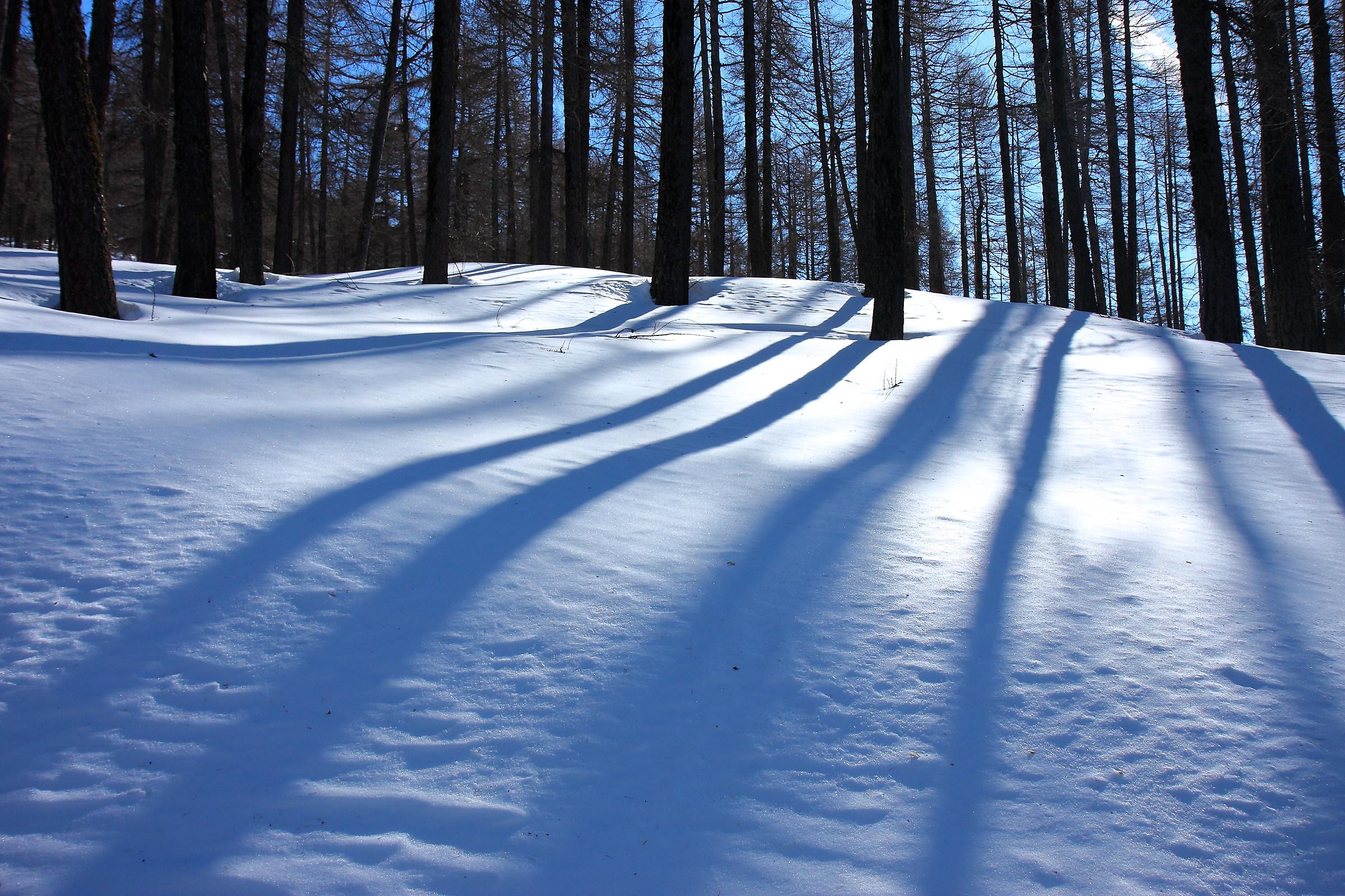 Shadows on the snow...