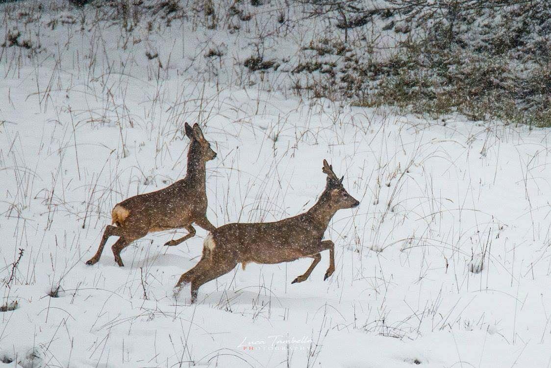 Run in the snow...