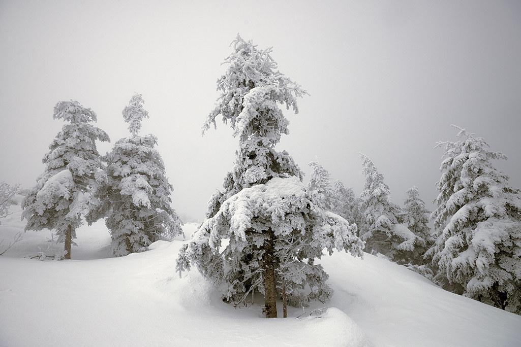 near the summit of Mount Falterona...