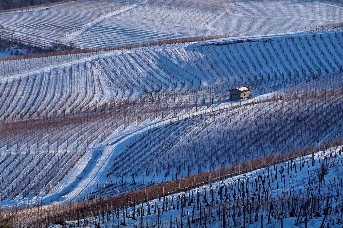 Vineyards near La Morra...