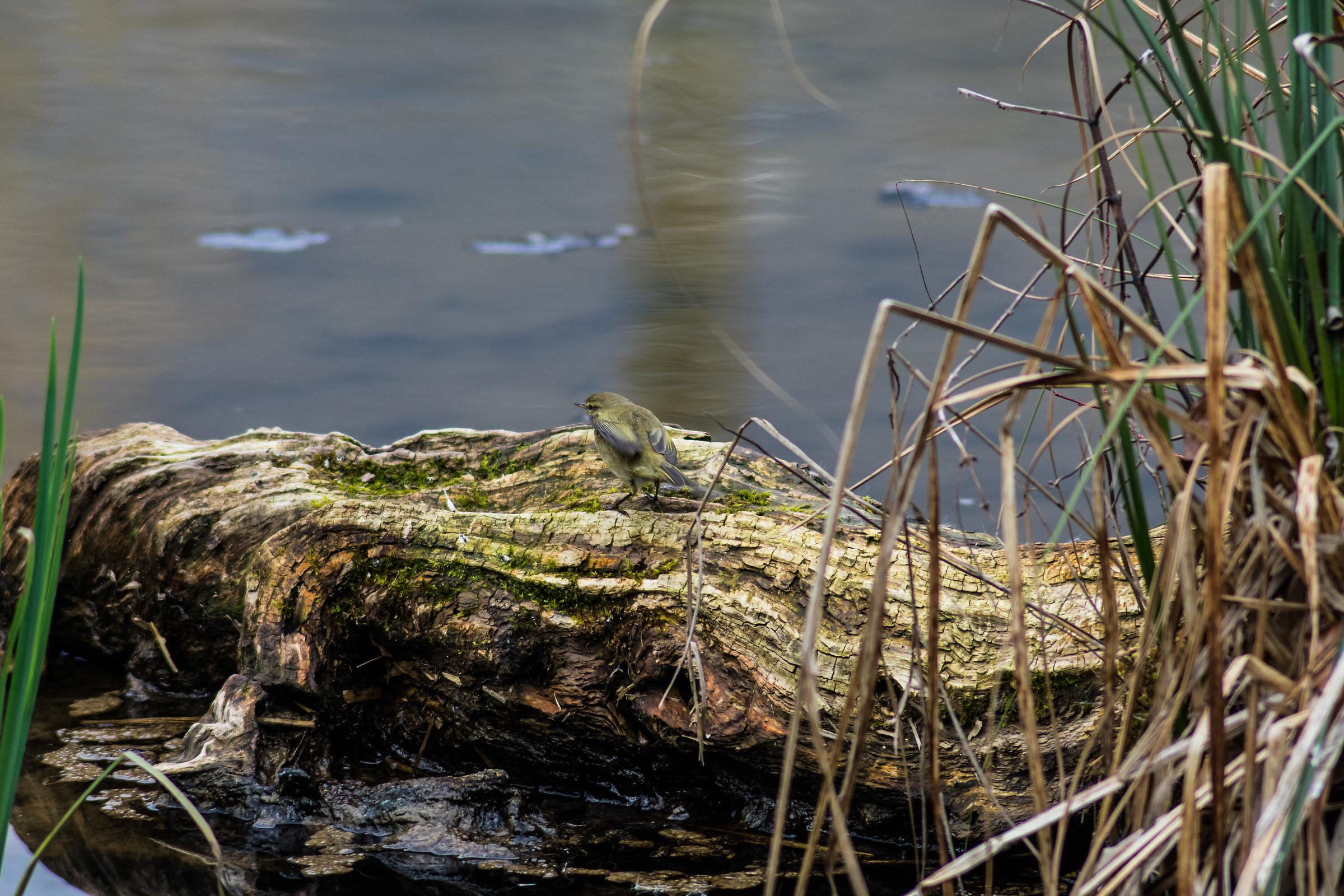 A nice inhabitant of the pond!...