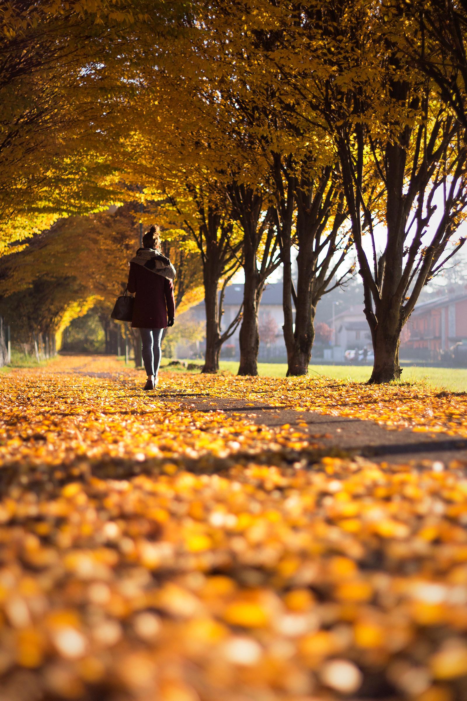 Memories of autumn...