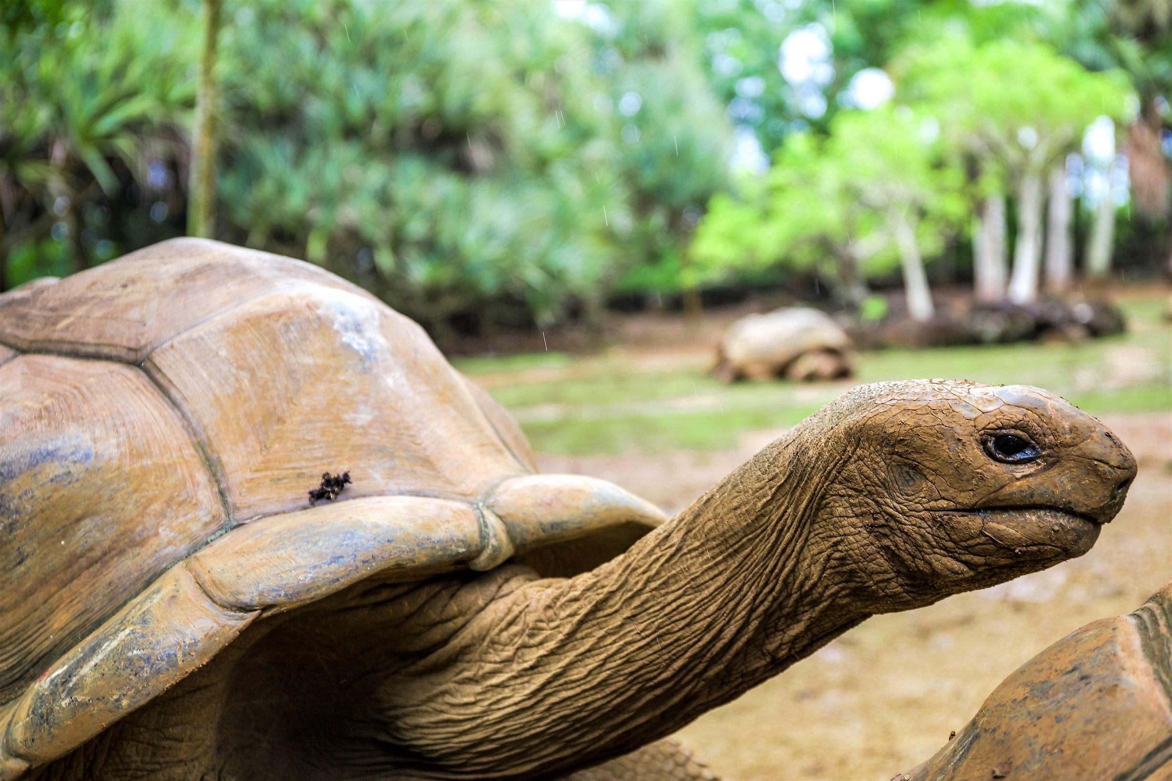 turtle portrait...