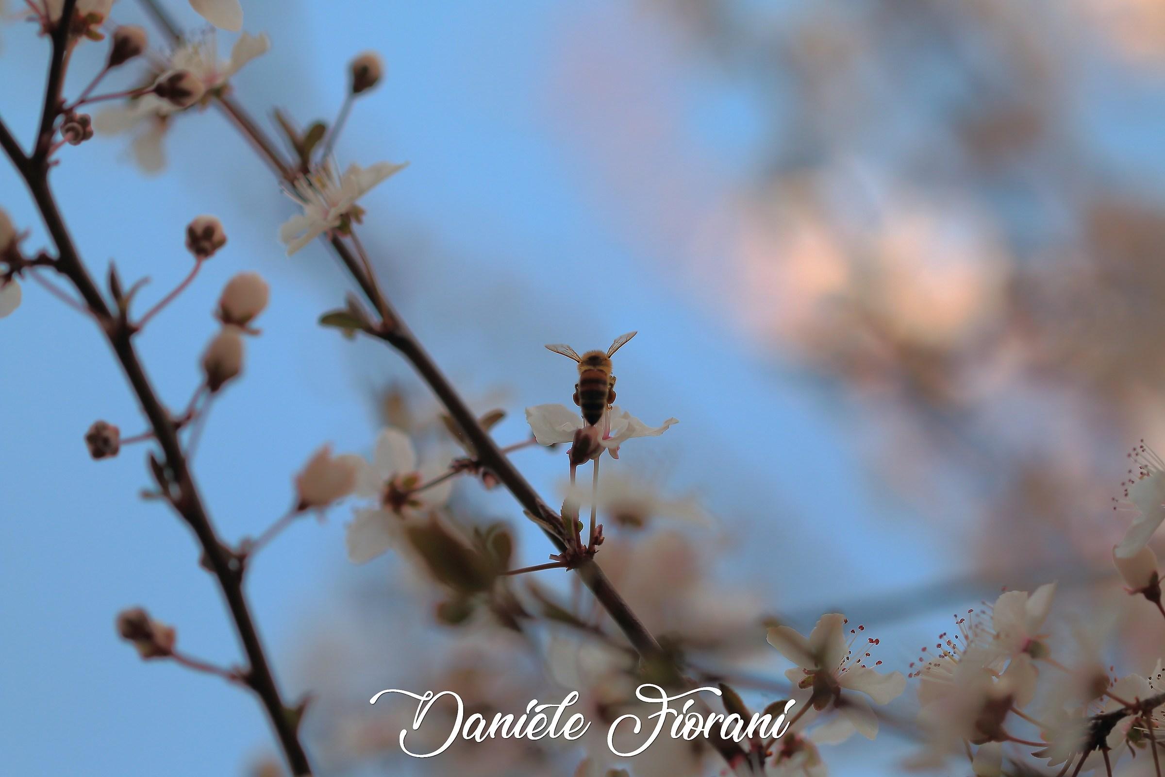 Finalmente primavera....?...