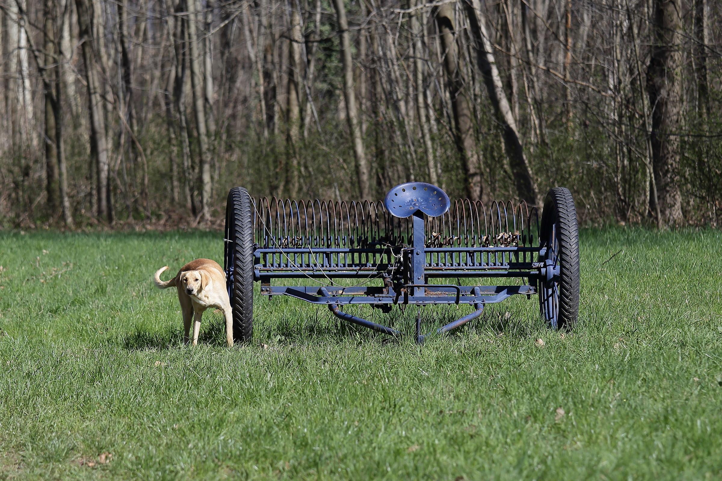 Semi-stray Luddite dog...