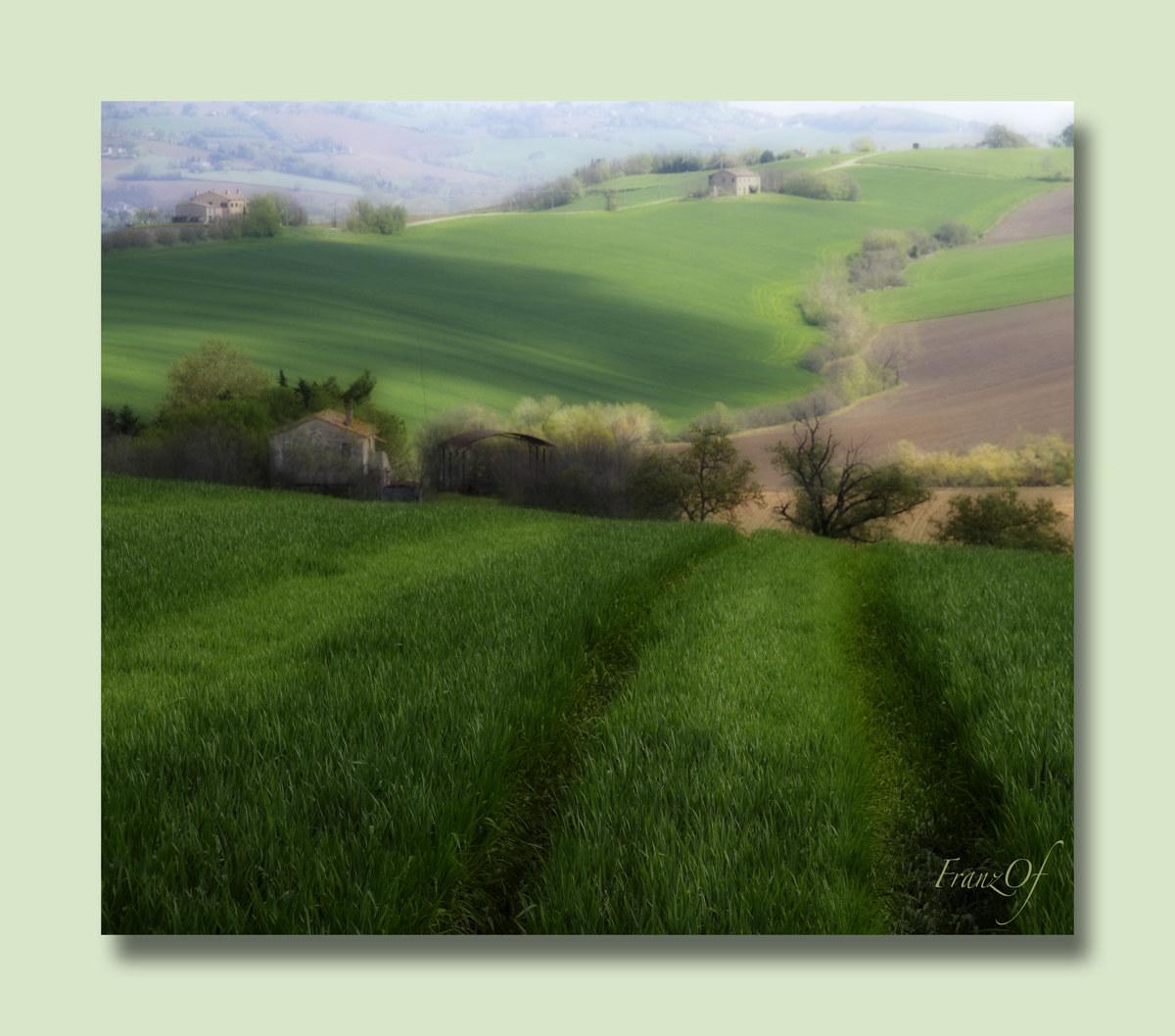 wheat fields...