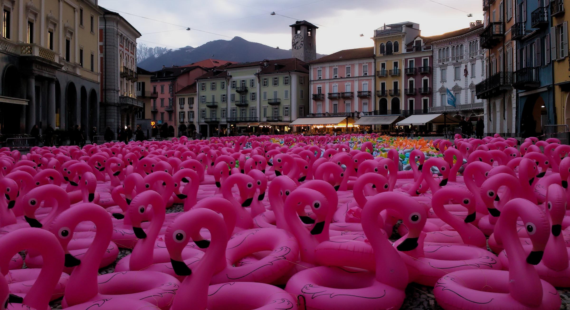 Flamingos in Piazza Grande/Locarno...