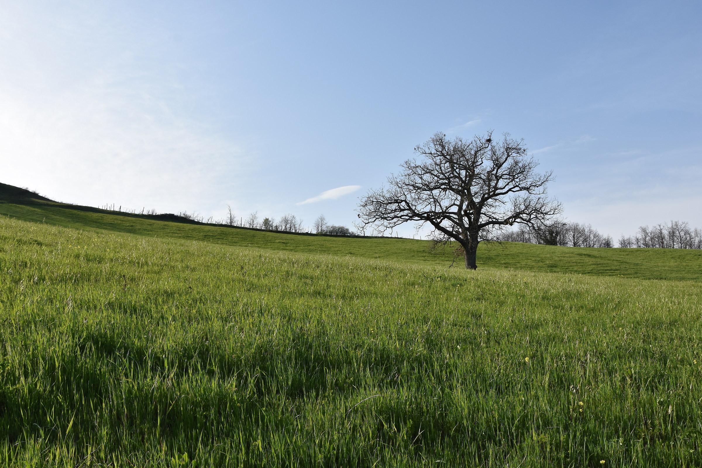 Solitary tree...
