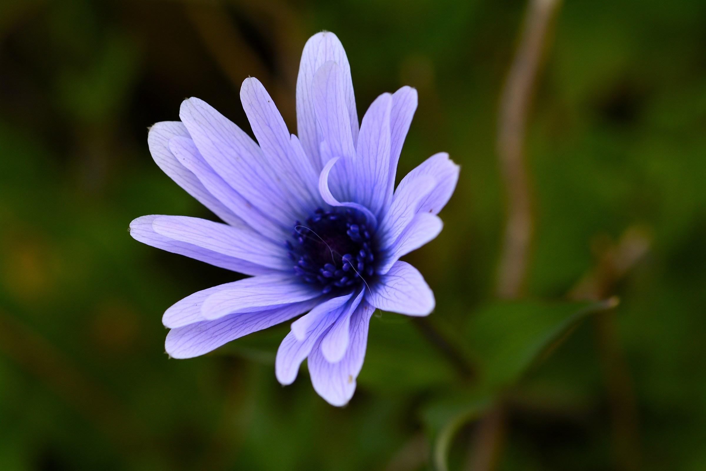 Flower in the garden...