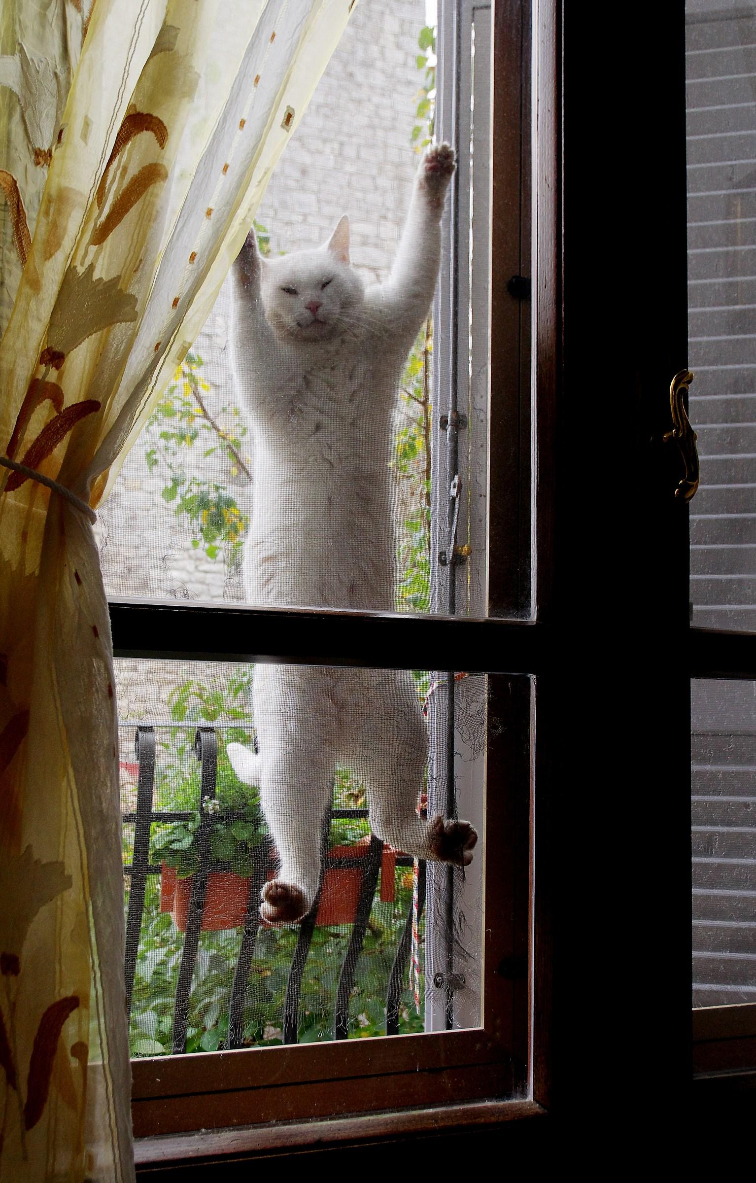 Spider cat...