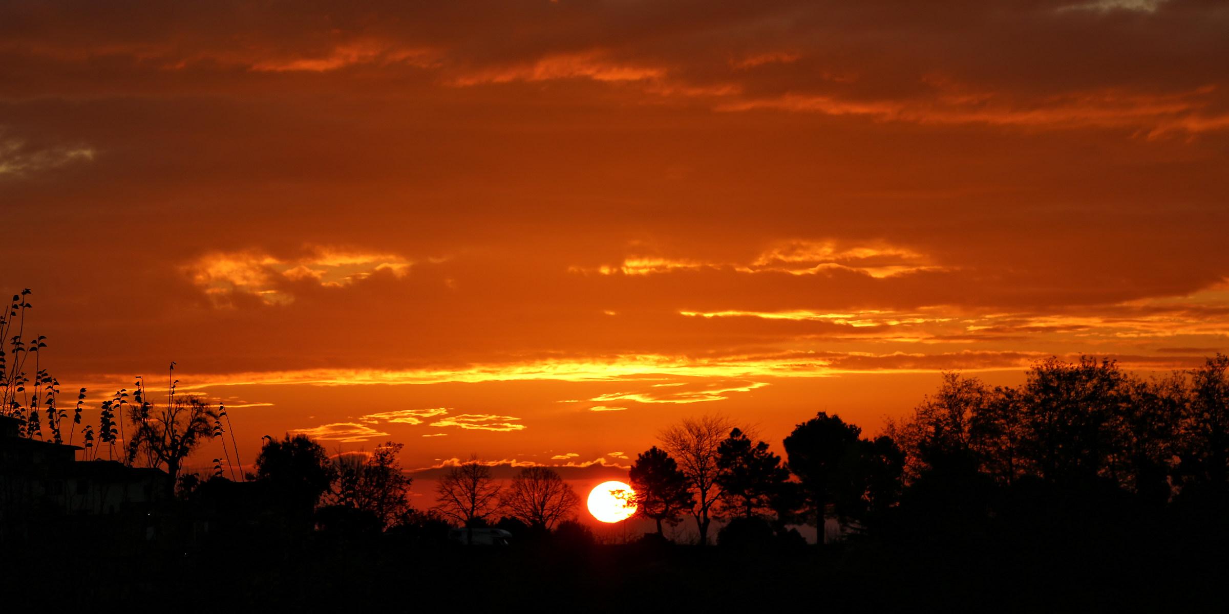 """Dawn """"African""""..."""